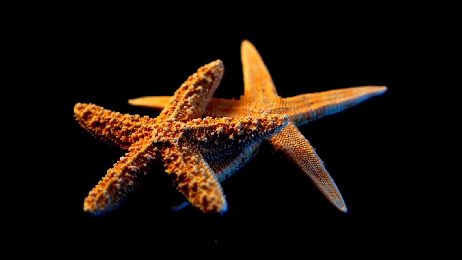 Free Starfish high quality background ID:29734 for hd 1600x900 computer