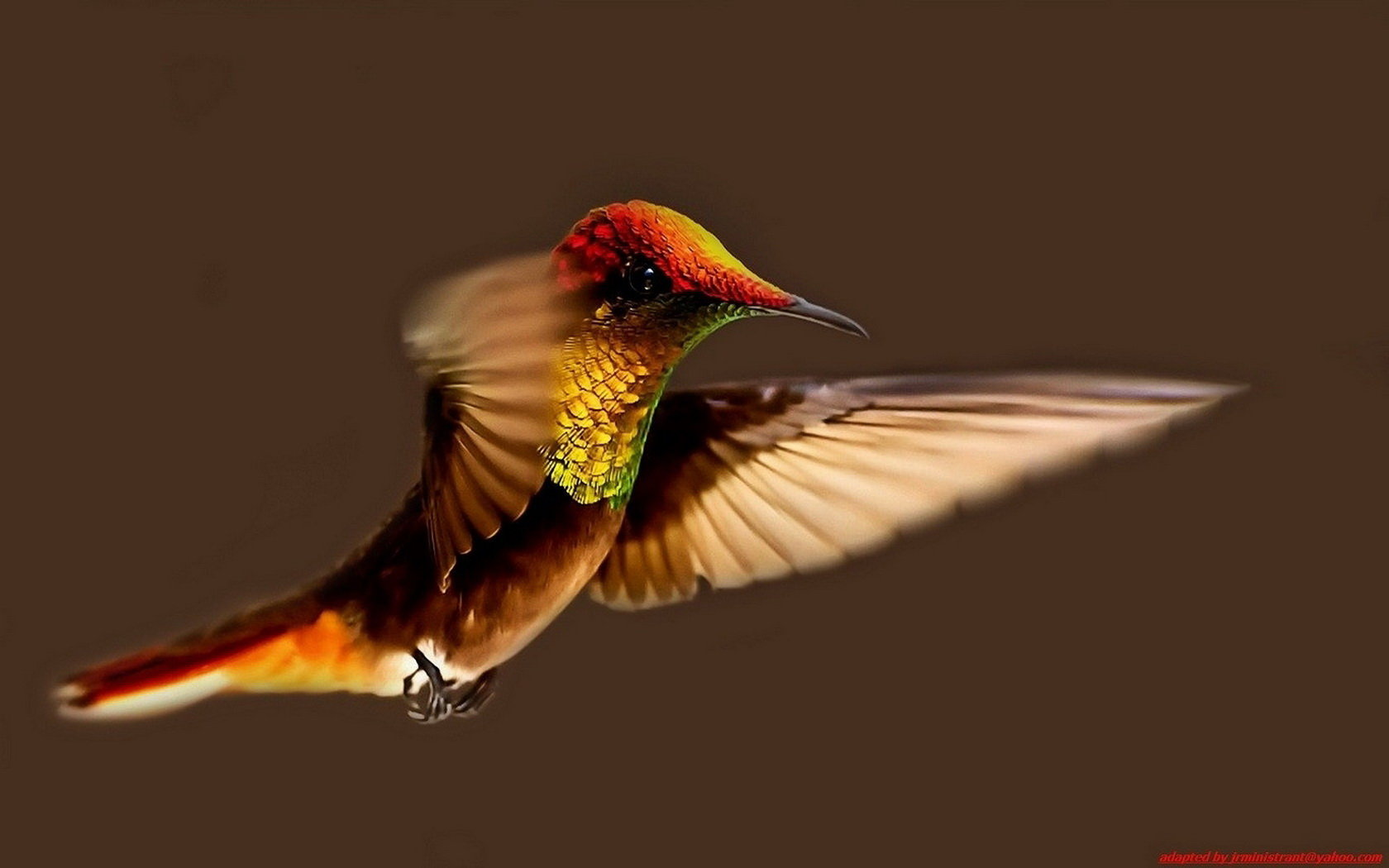 Free Hummingbird high quality background ID:215712 for hd 1680x1050 computer
