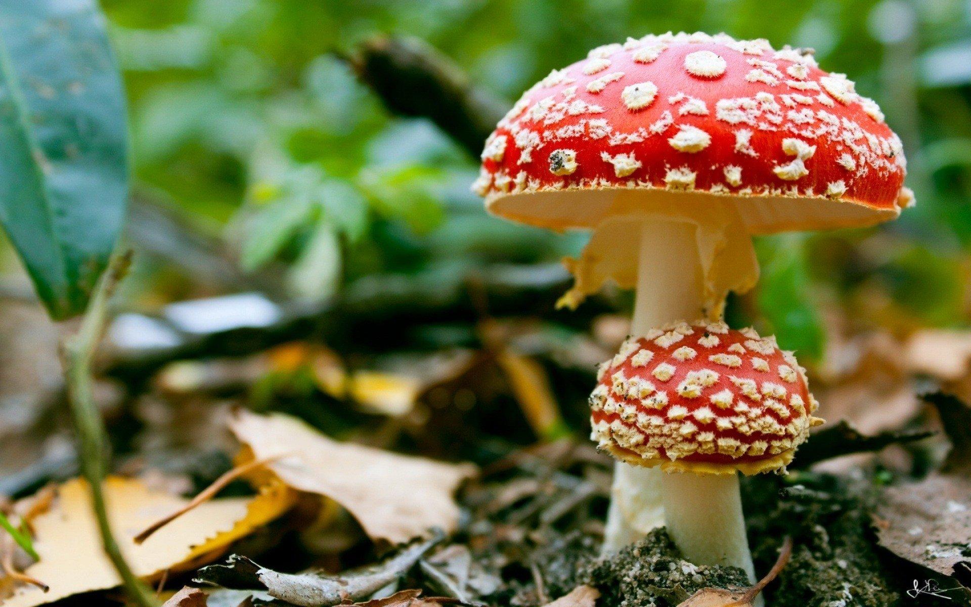 High Resolution Mushroom Hd 1920x1200 Background Id 145198 For Pc