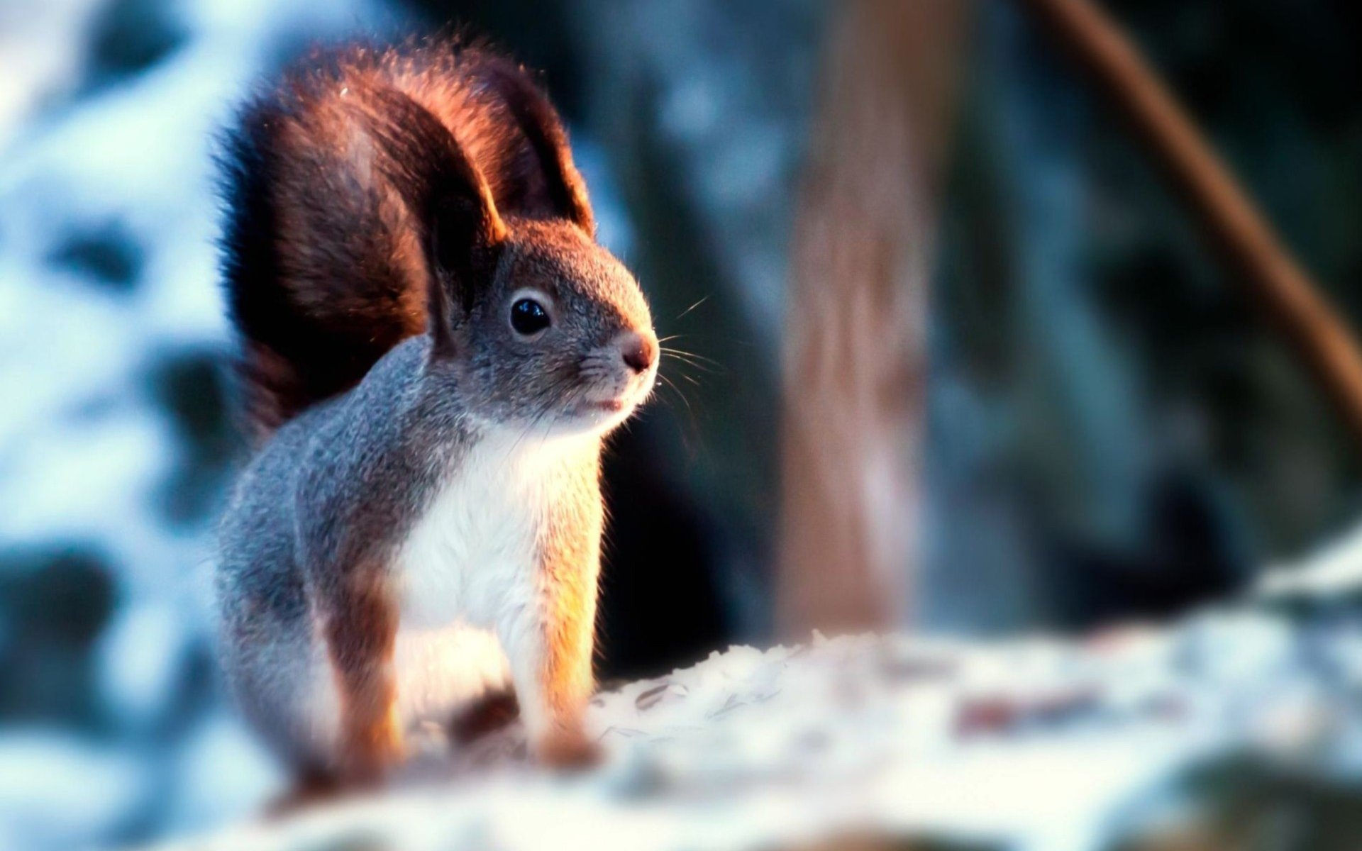 Download hd 1920x1200 Squirrel PC wallpaper ID:311721 for free