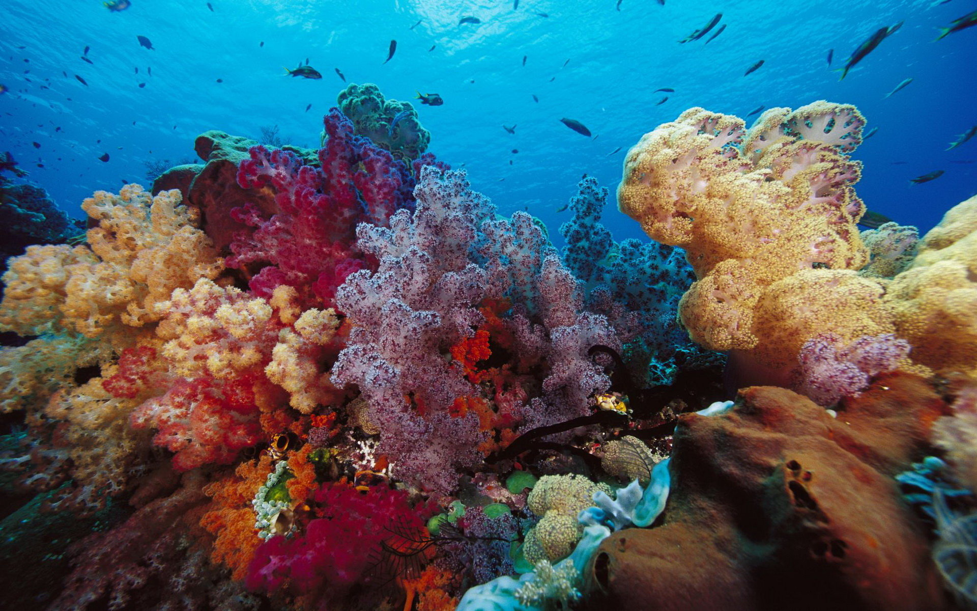 Free download Coral reef background ID:47378 hd 1920x1200 for desktop