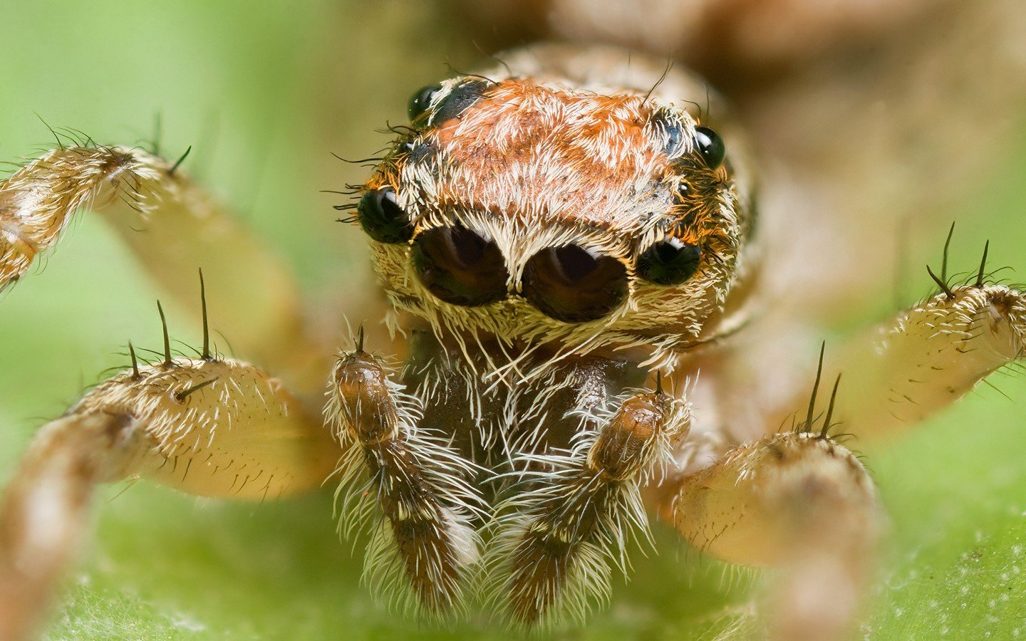 Free Spider high quality background ID:22424 for hd 1440x900 desktop