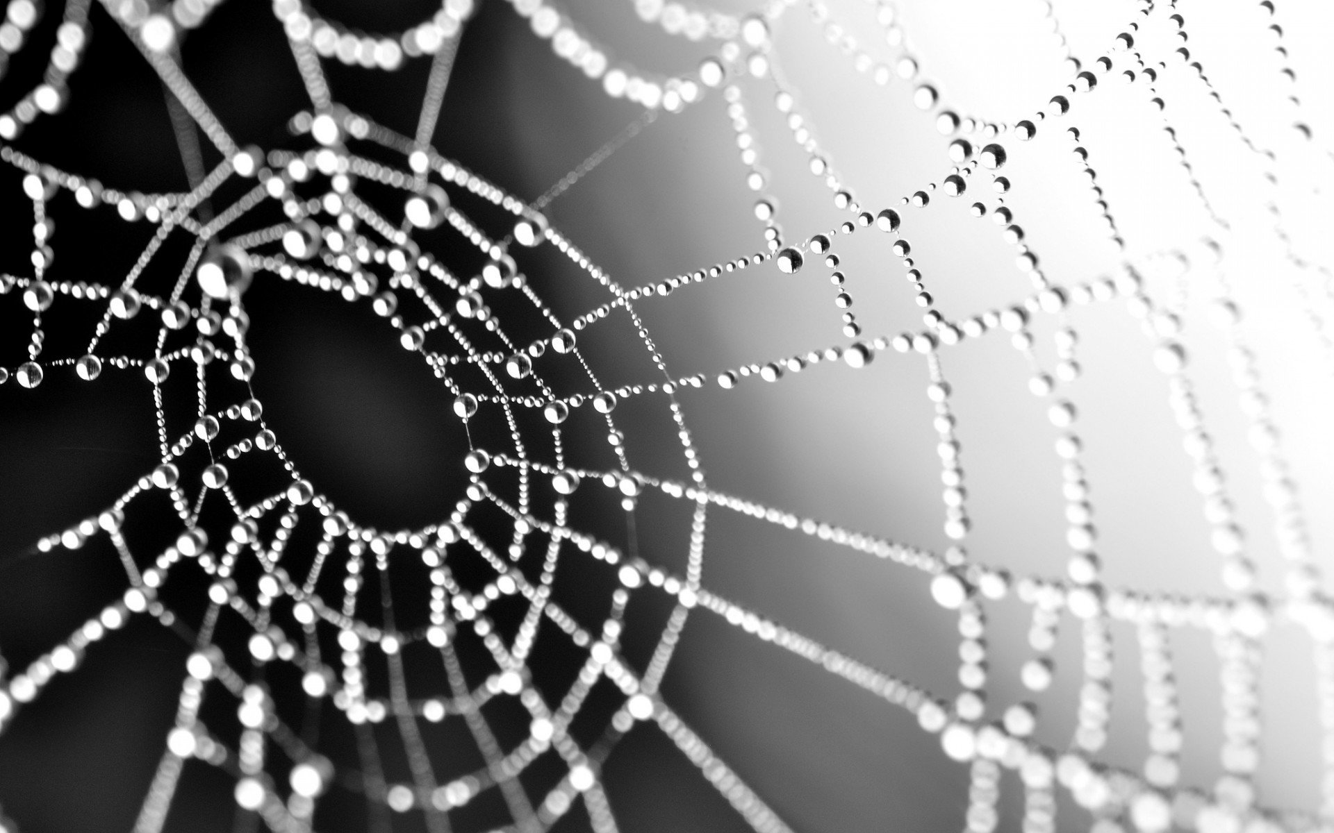 Awesome Spider Web free wallpaper ID:184745 for hd 1920x1200 desktop