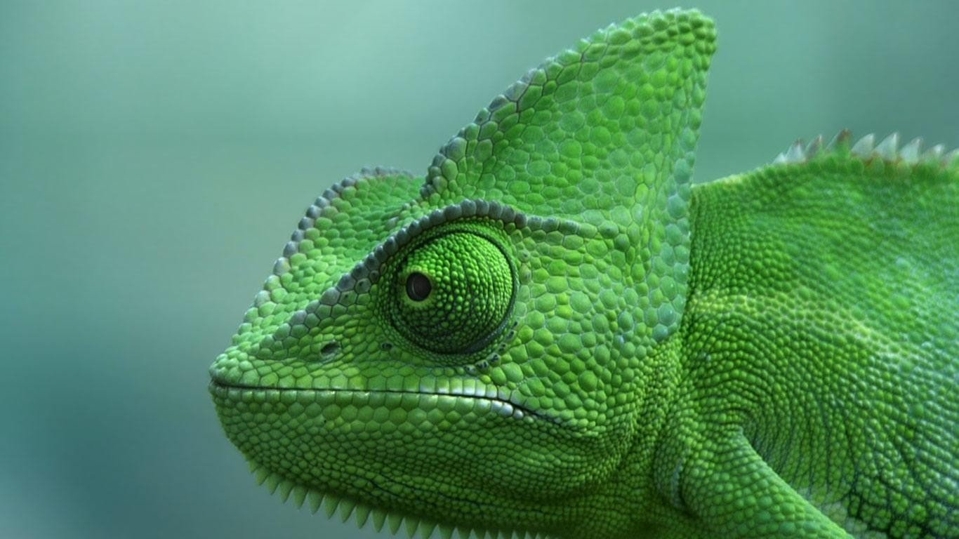 Awesome Chameleon free background ID:462471 for hd 1366x768 computer