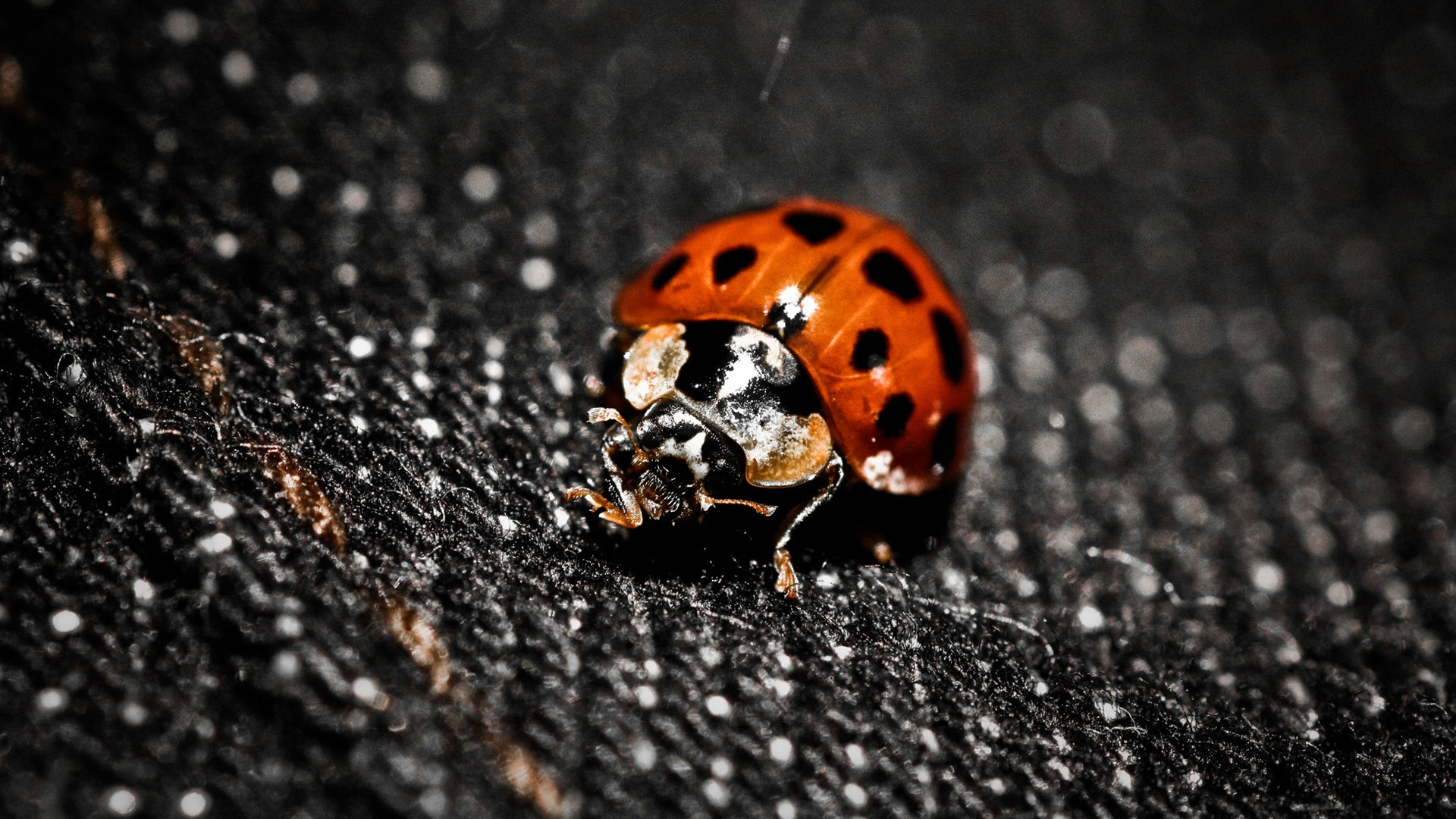 High resolution Ladybug hd 1920x1080 background ID:270325 for PC