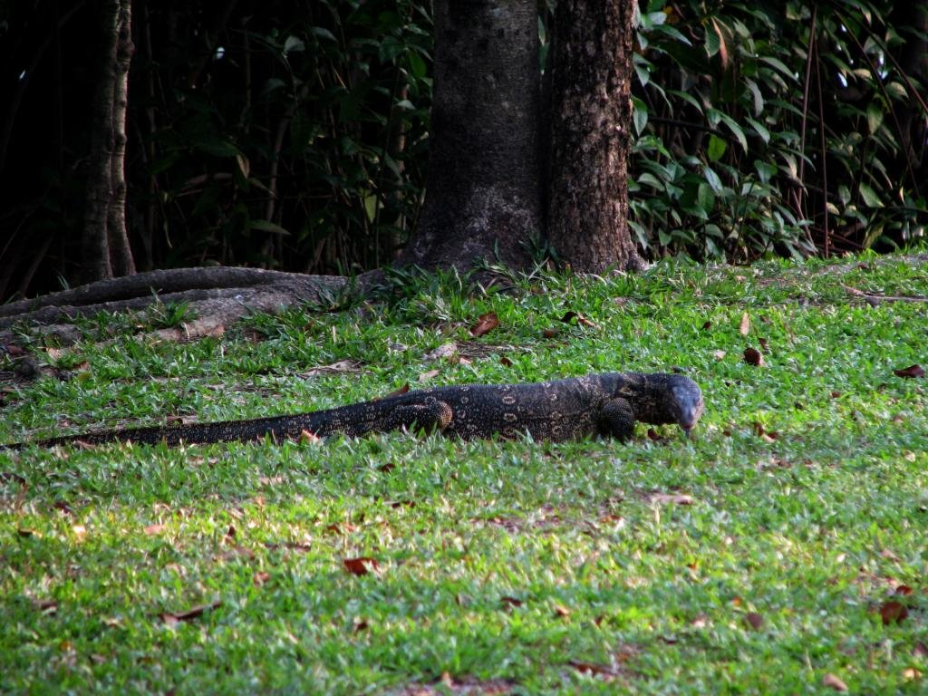 Awesome Monitor Lizard free wallpaper ID:450142 for hd 1024x768 desktop