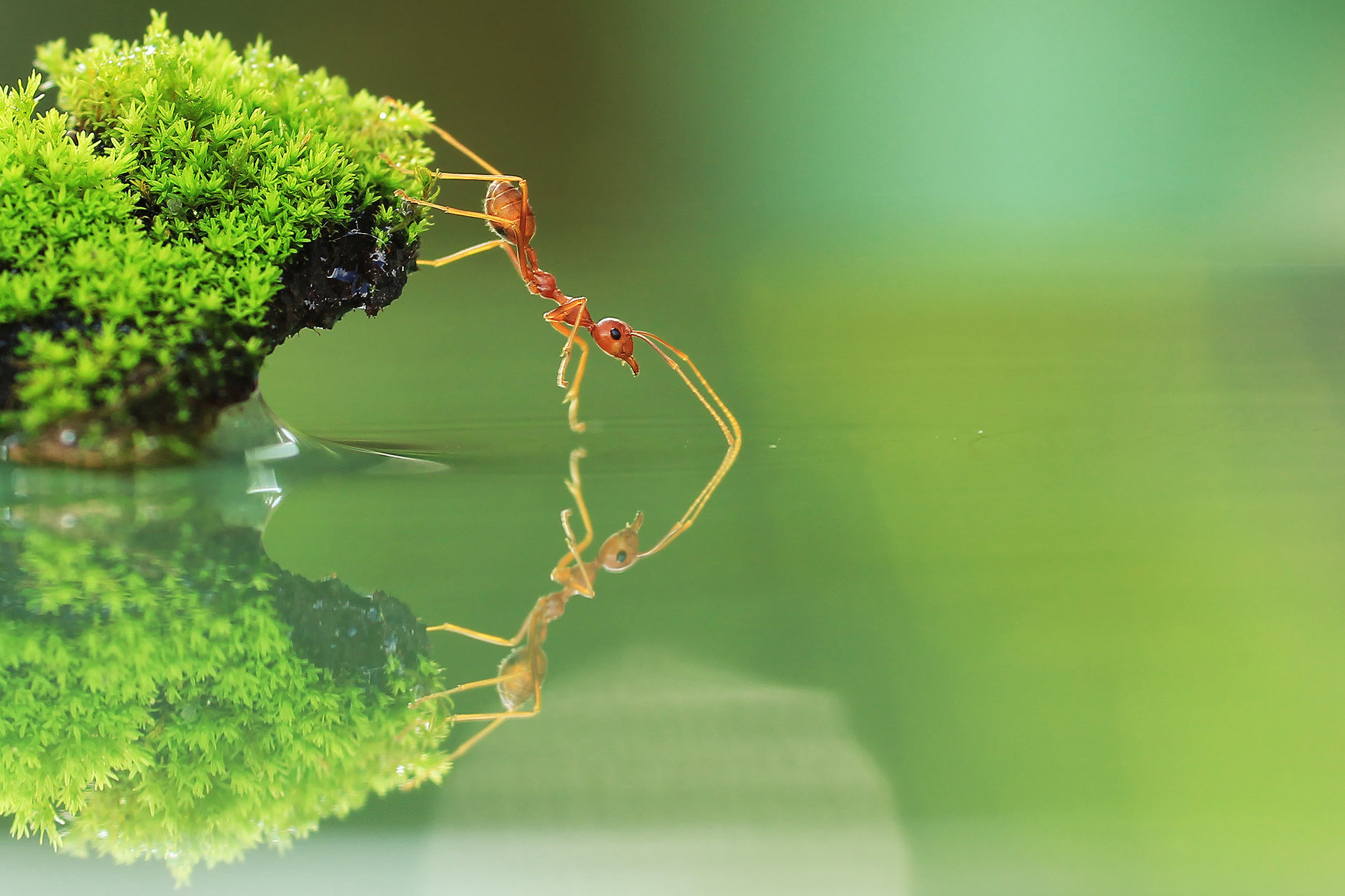 Free download Ant background ID:401347 hd 1920x1280 for desktop