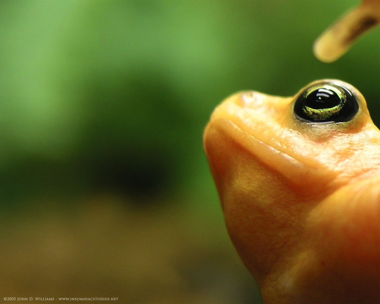 Free download Frog background ID:328890 hd 1280x1024 for computer