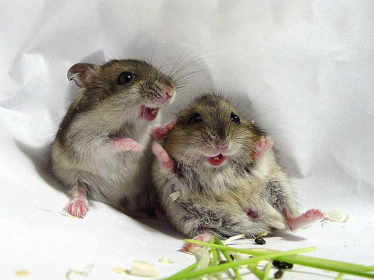 Free Download Mouse Wallpaper ID132509 Hd 1280x960 For Desktop