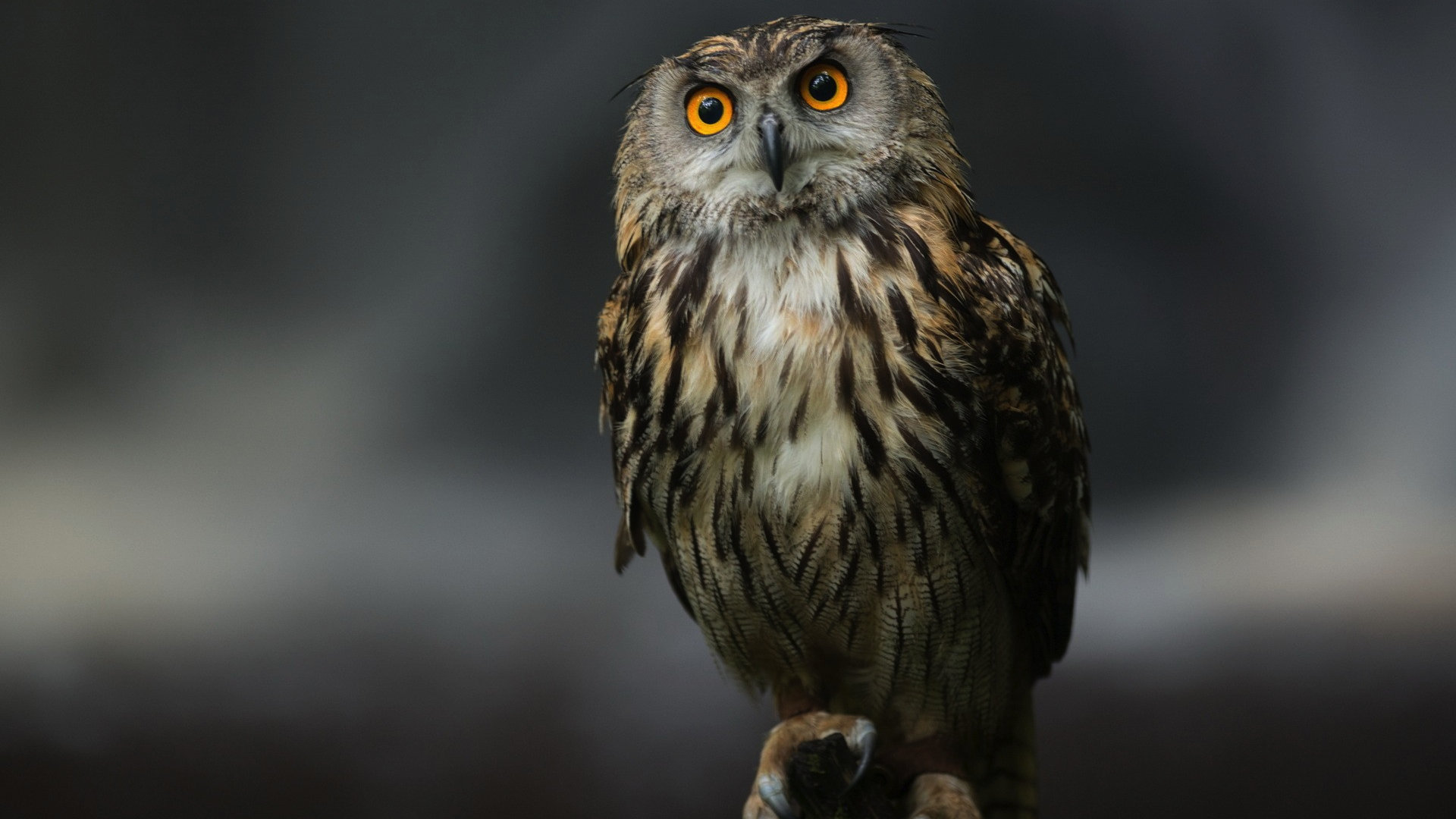 Awesome Owl free wallpaper ID:236929 for hd 1920x1080 desktop