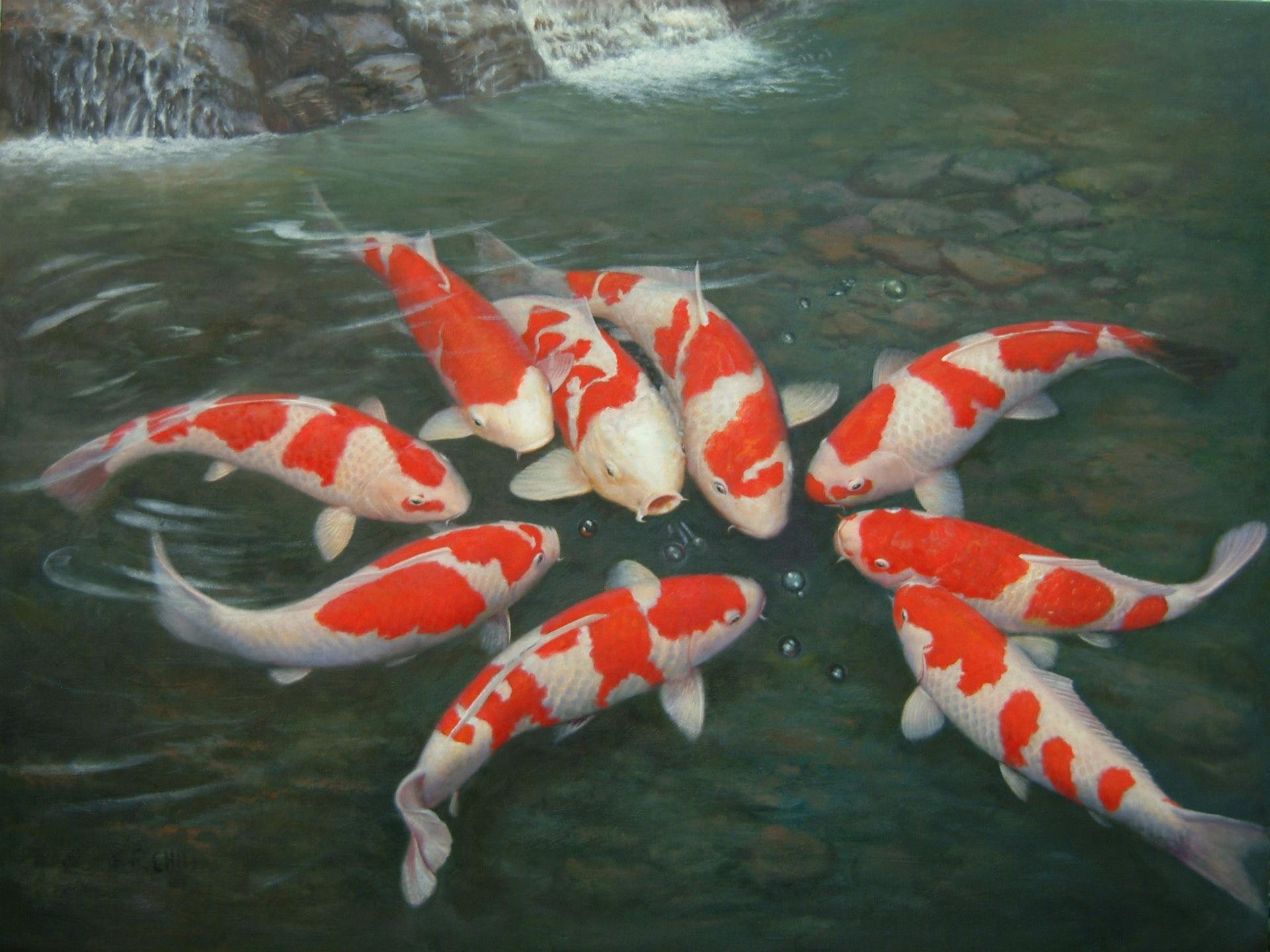 Free download Koi background ID:134456 hd 1920x1440 for PC
