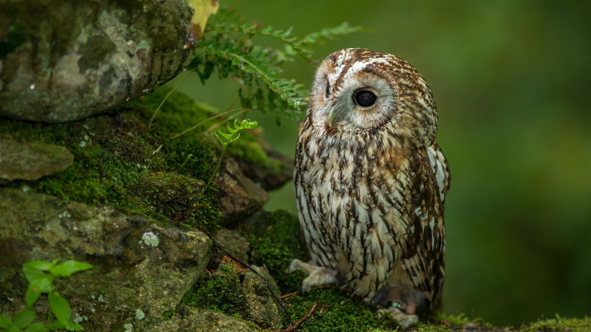 Free Owl high quality wallpaper ID:236880 for full hd 1920x1080 PC
