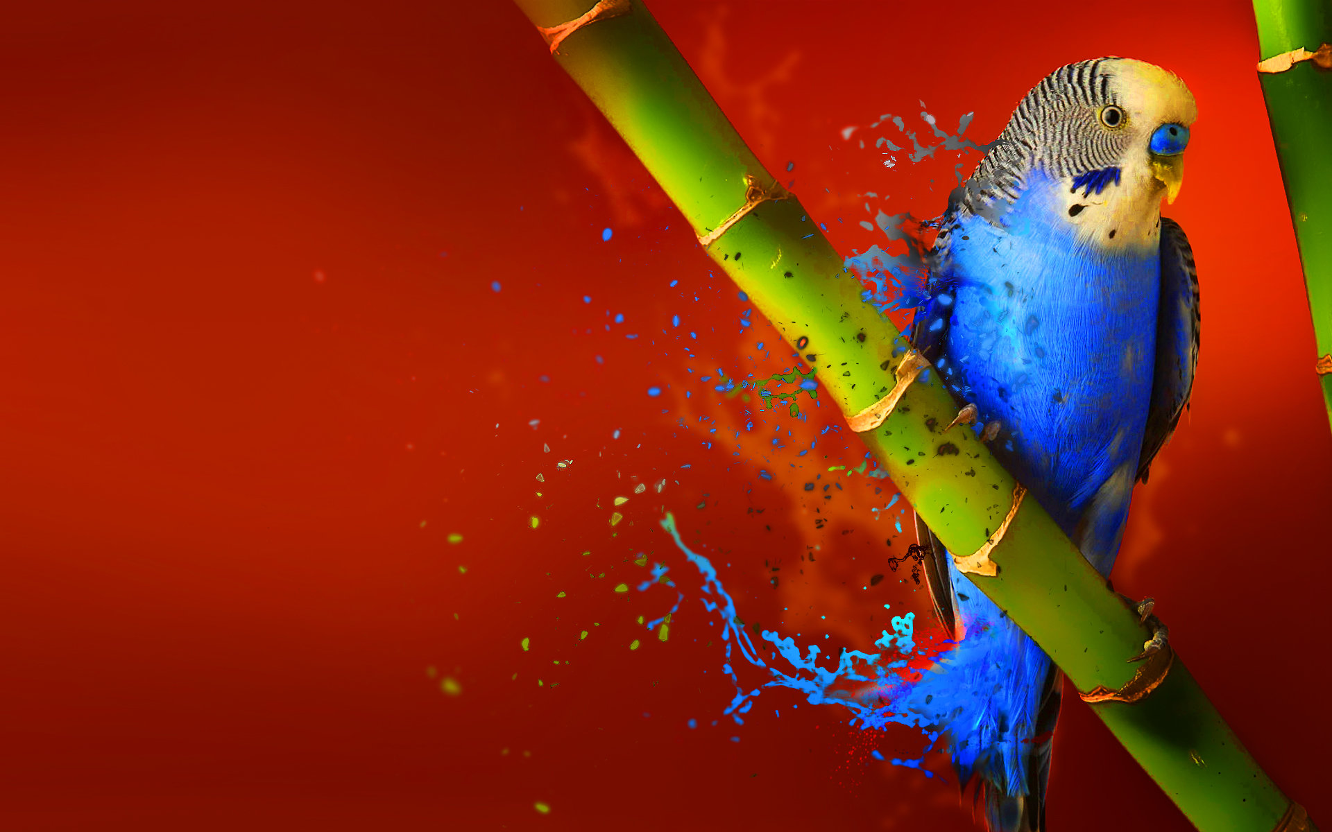 Free download Budgerigar background ID:32580 hd 1920x1200 for PC