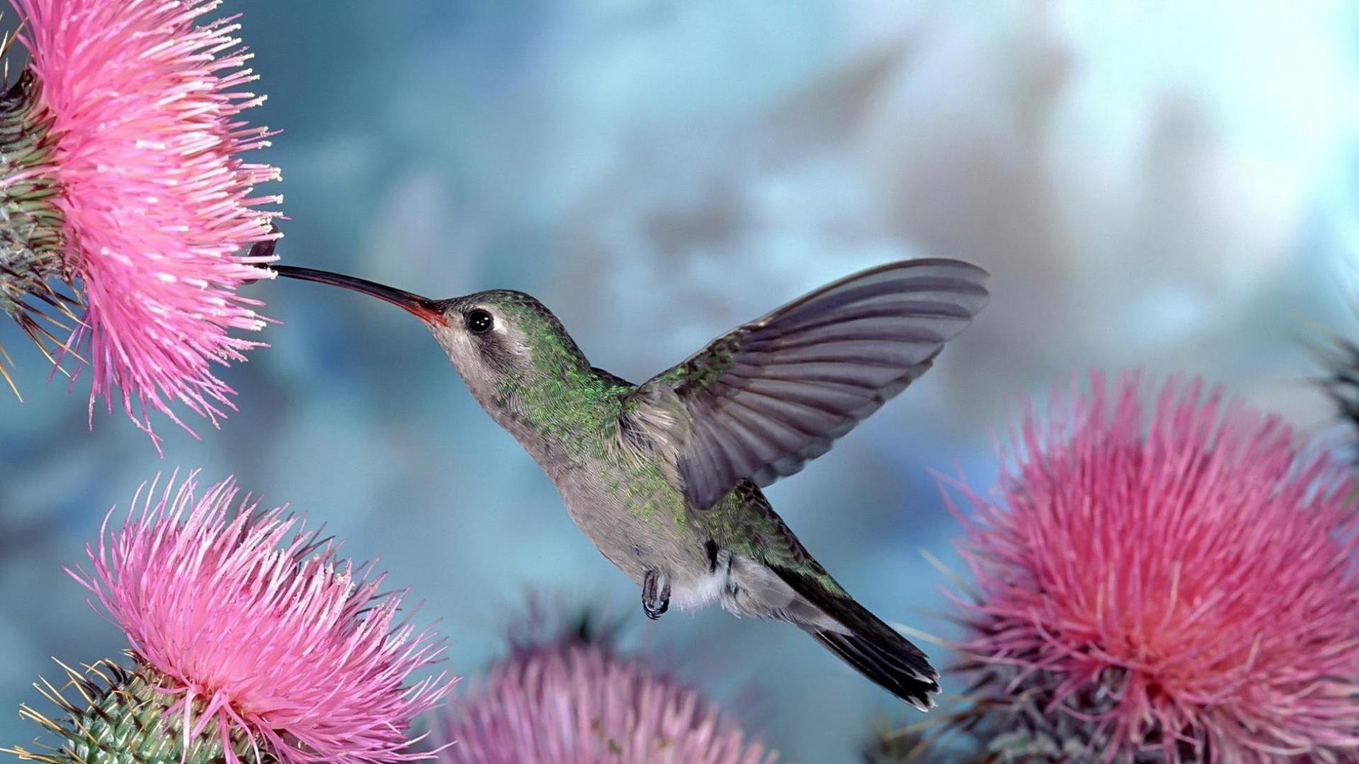 Free Hummingbird high quality wallpaper ID:215651 for full hd computer