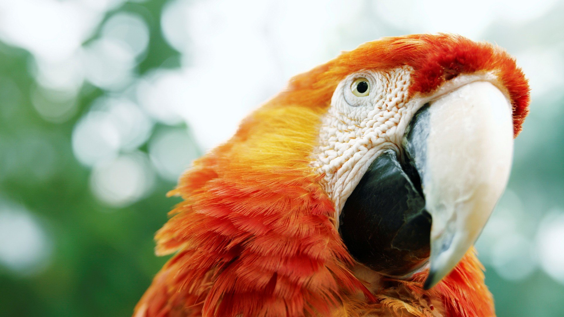Awesome Macaw free background ID:46294 for full hd 1080p desktop