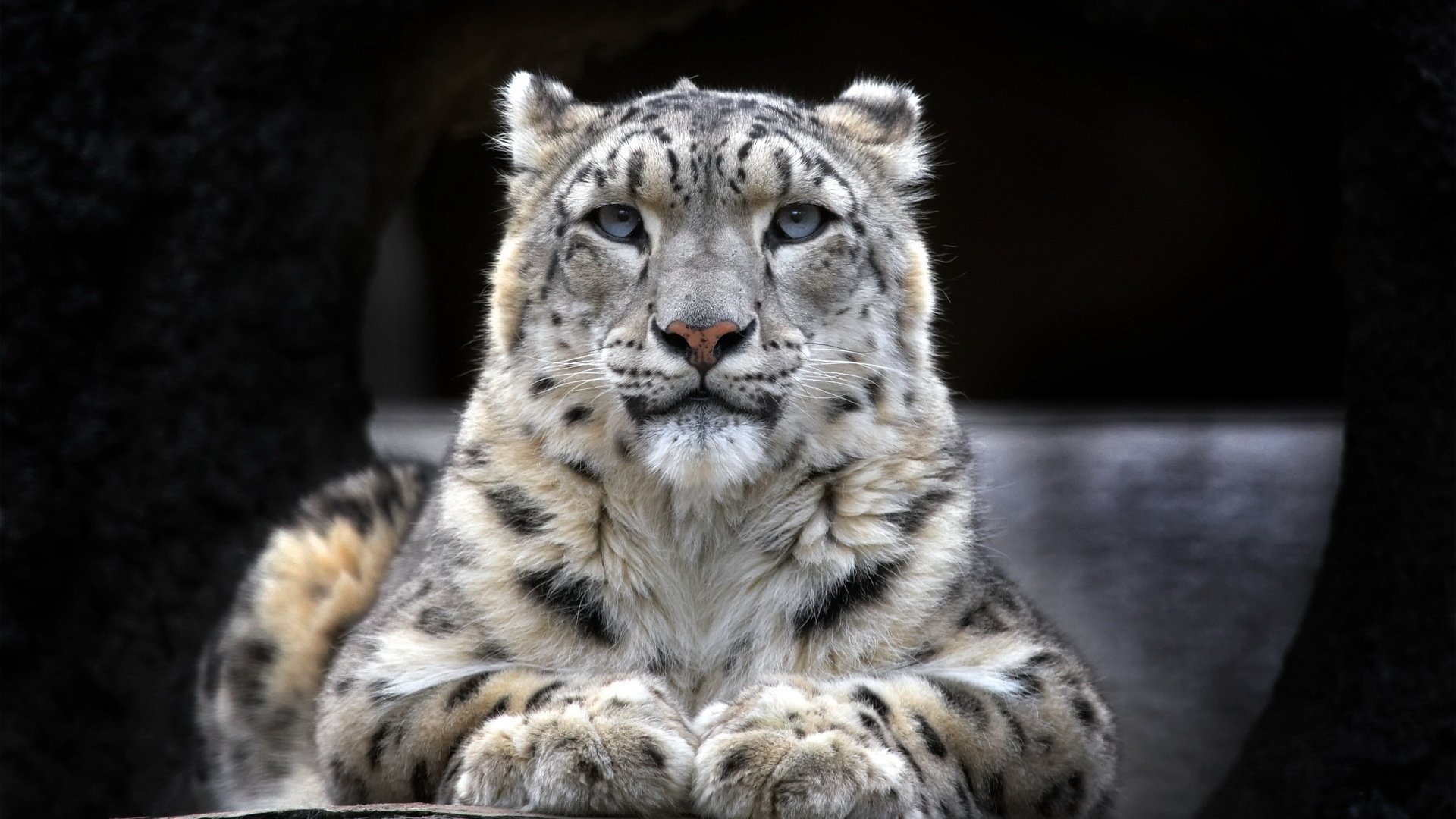 Download hd 1920x1080 Snow Leopard computer wallpaper ID:34414 for free