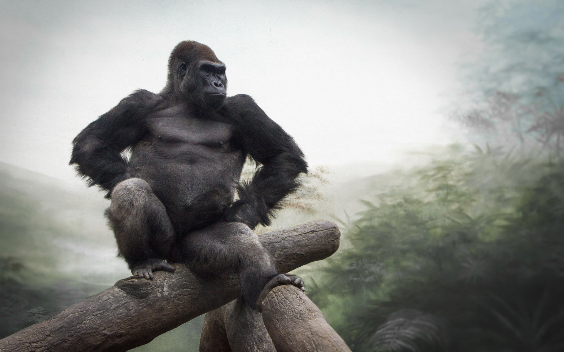 High Resolution Gorilla Hd 1920x1200 Wallpaper Id145511 For