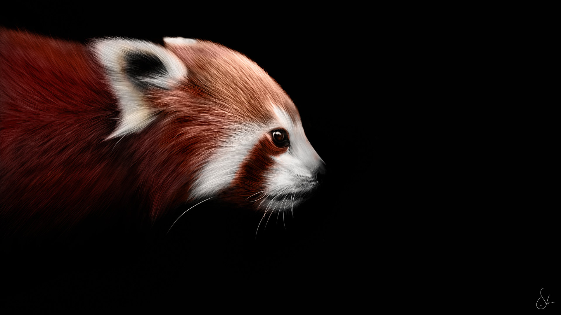 Free download Red Panda background ID:63993 full hd 1920x1080 for desktop