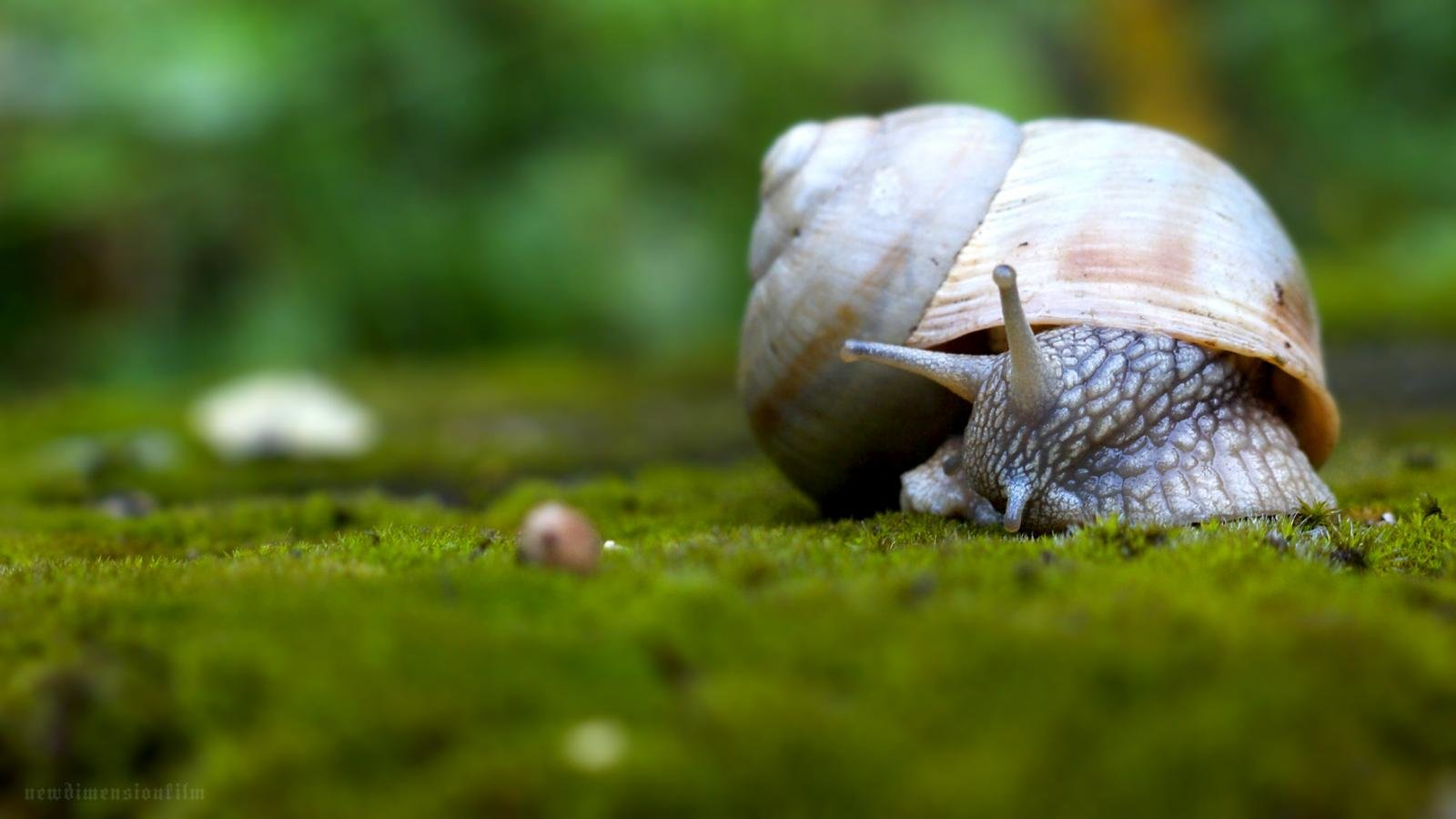 Awesome Snail free wallpaper ID:198800 for hd 1600x900 desktop