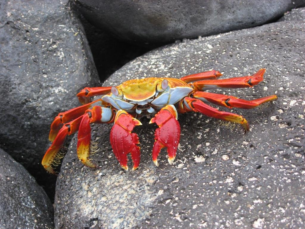 Free download Crab background ID:294331 hd 1024x768 for computer