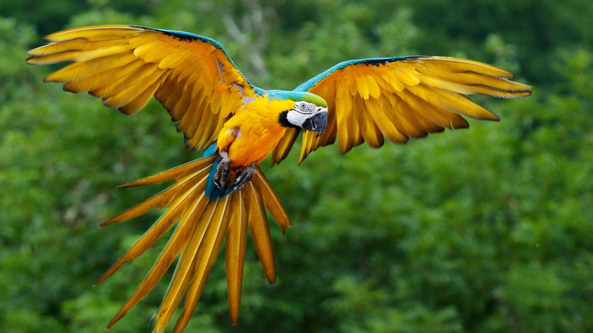Download hd 1920x1080 Macaw PC wallpaper ID:46464 for free