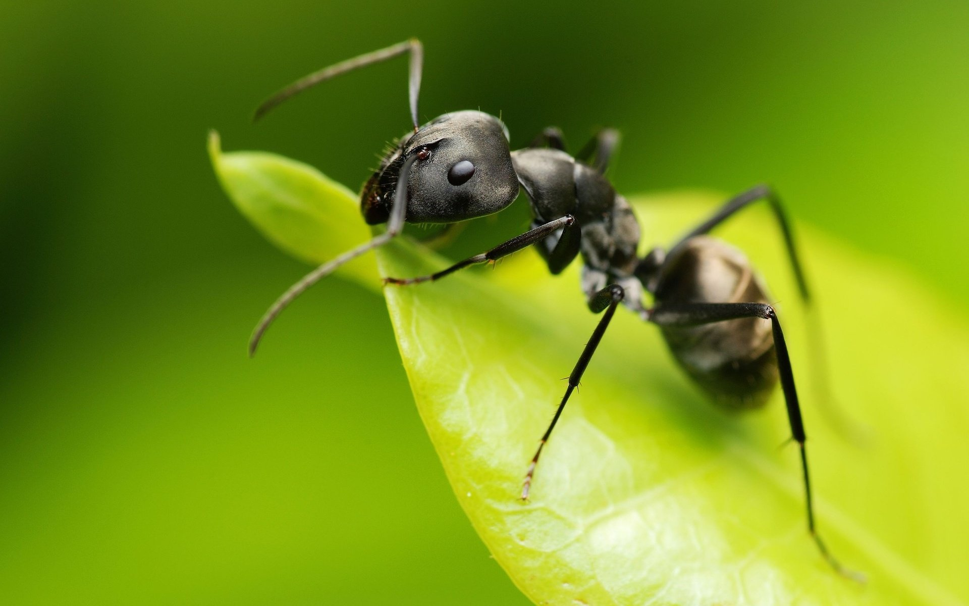 Free Ant high quality background ID:401329 for hd 1920x1200 PC