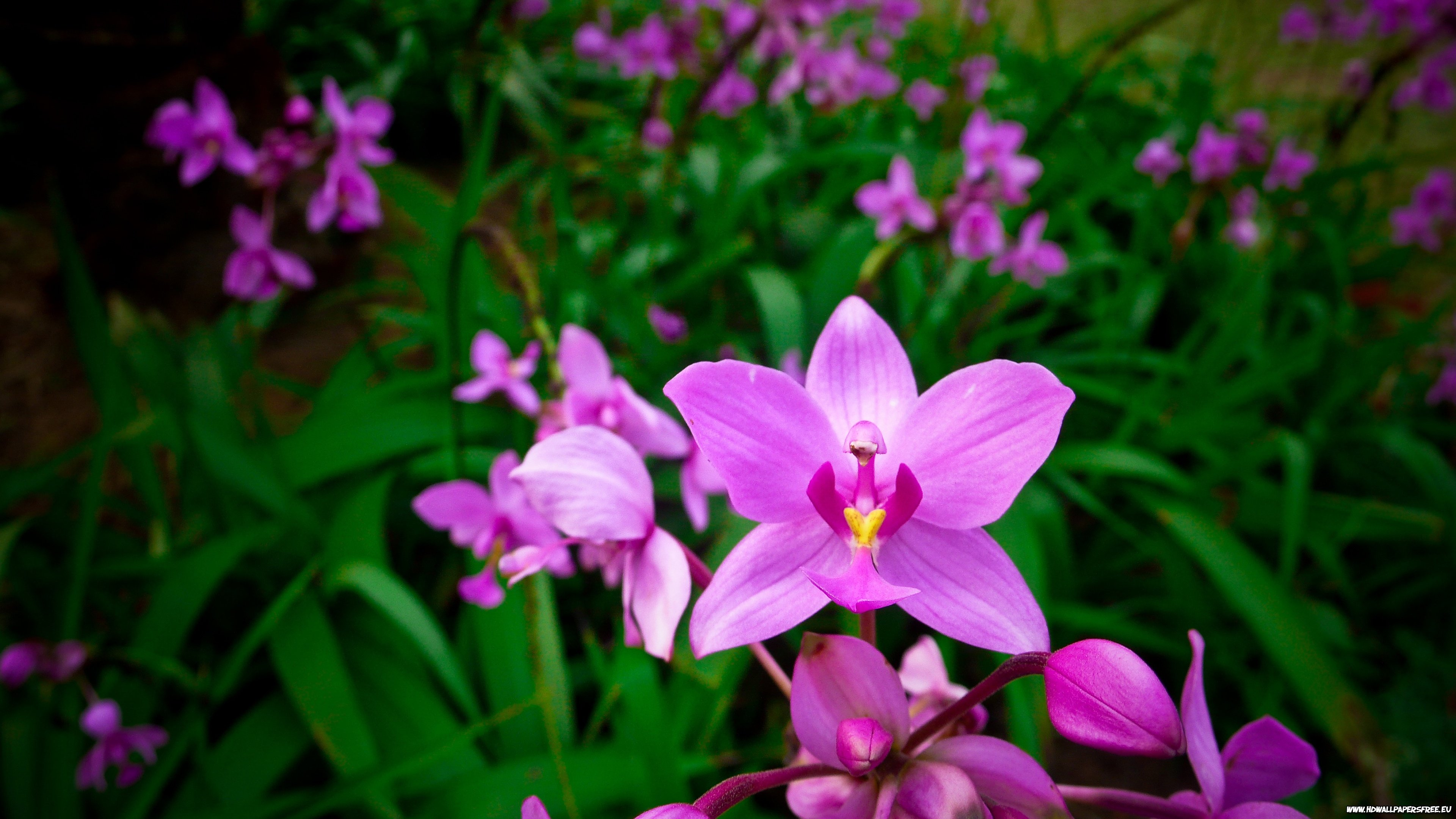 orchid background 4k 449434