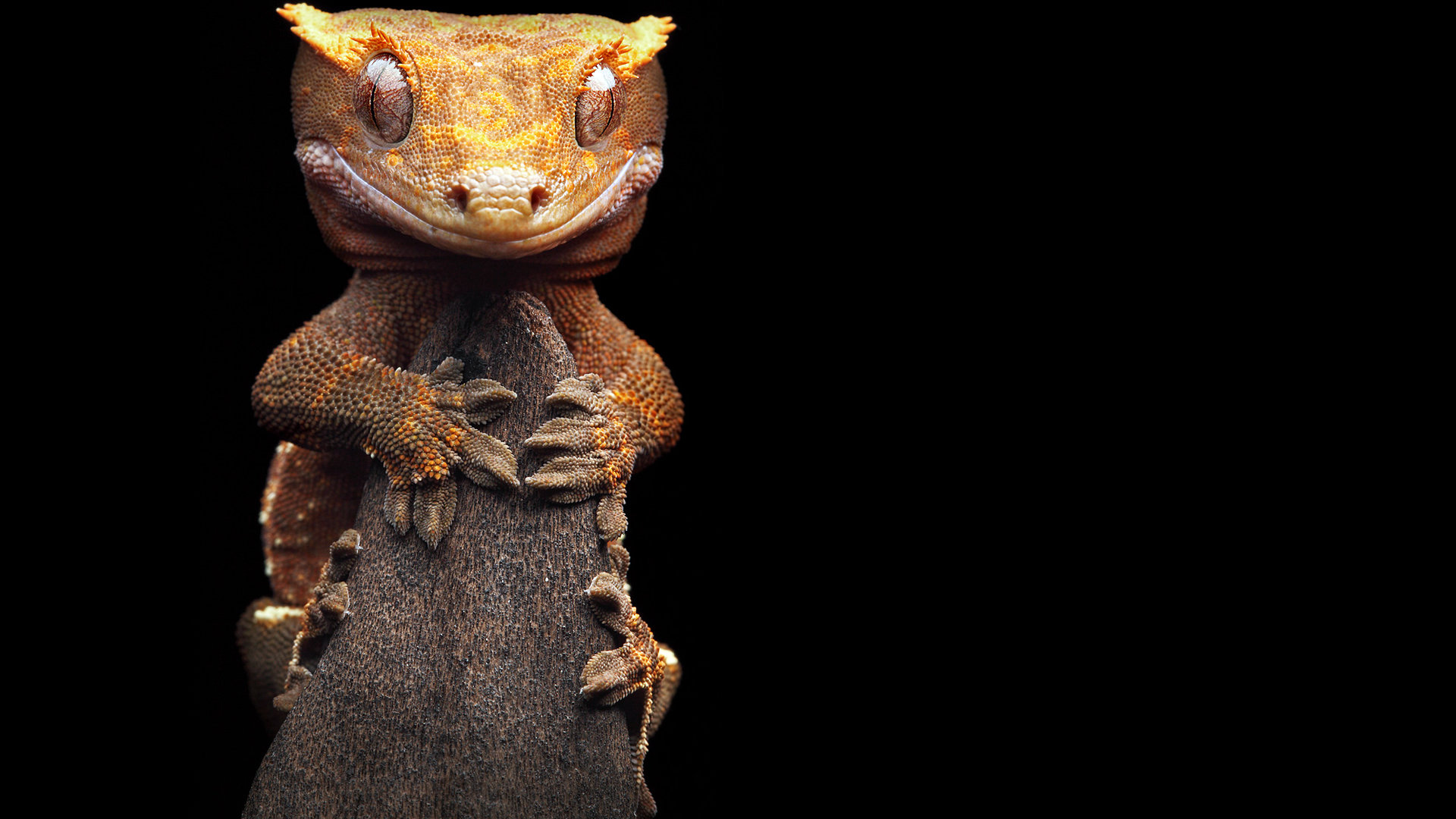 Awesome Gecko free wallpaper ID:114520 for full hd 1080p desktop