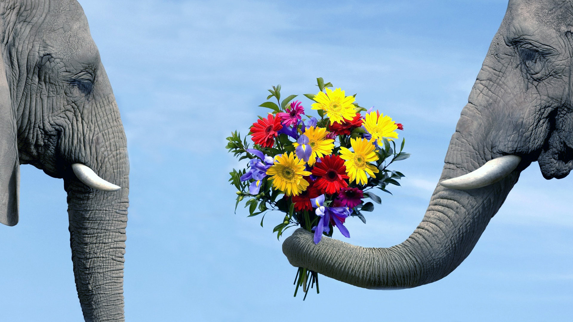 Awesome Elephant free wallpaper ID:132609 for full hd 1080p desktop