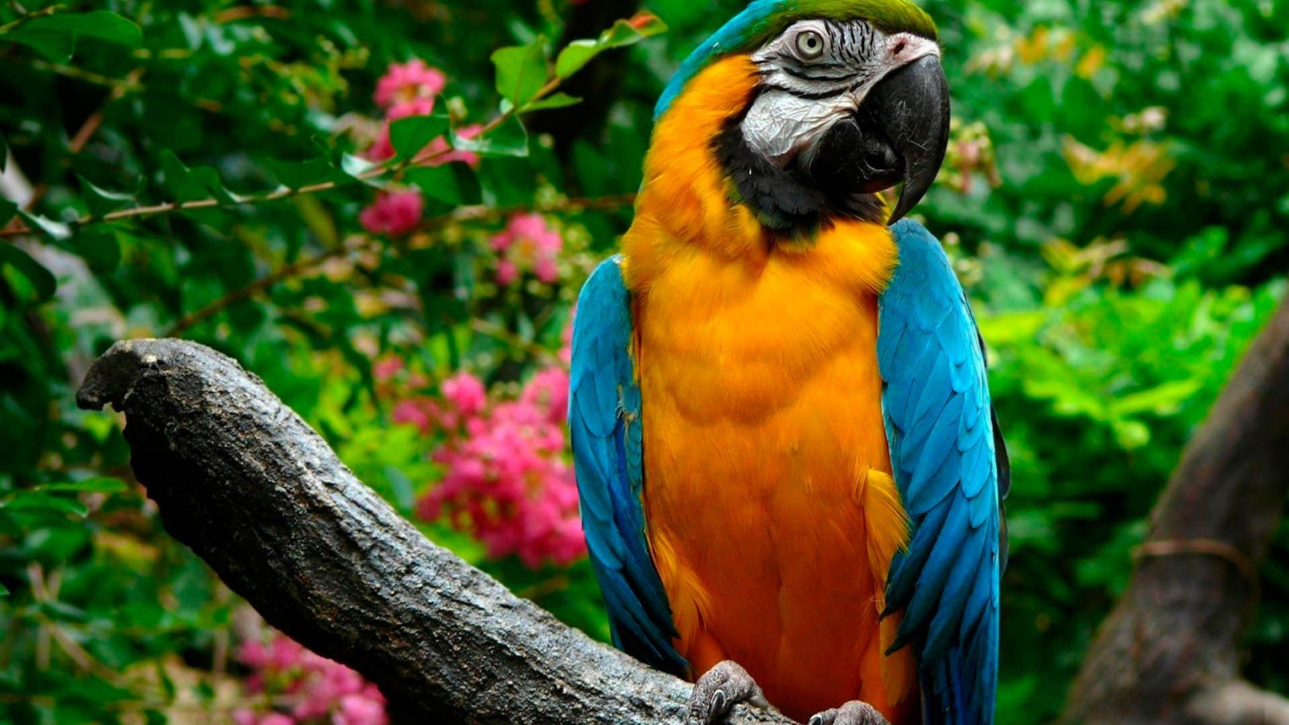 Best Macaw wallpaper ID:46434 for High Resolution hd 2560x1440 PC