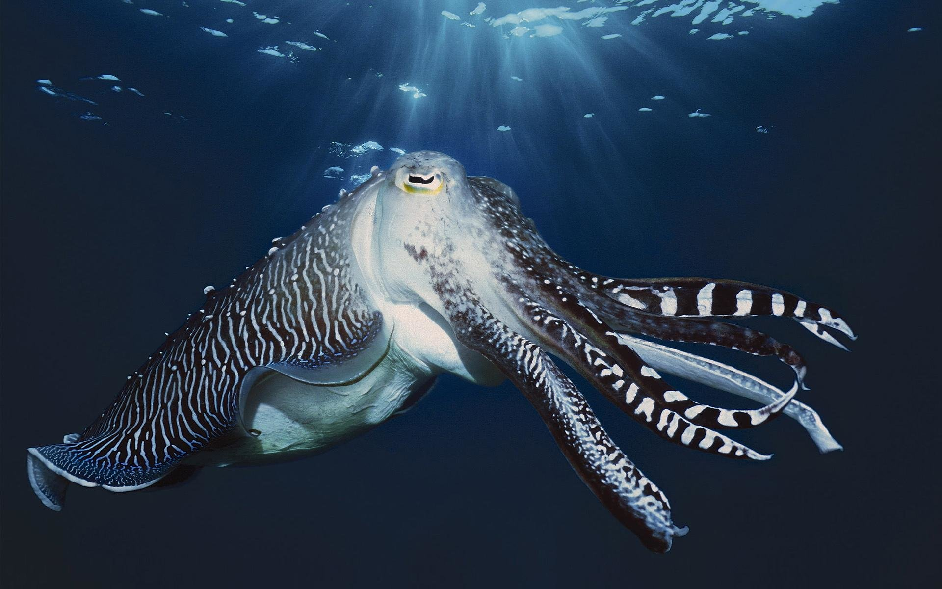 Awesome Cuttlefish free background ID:239833 for hd 1920x1200 desktop