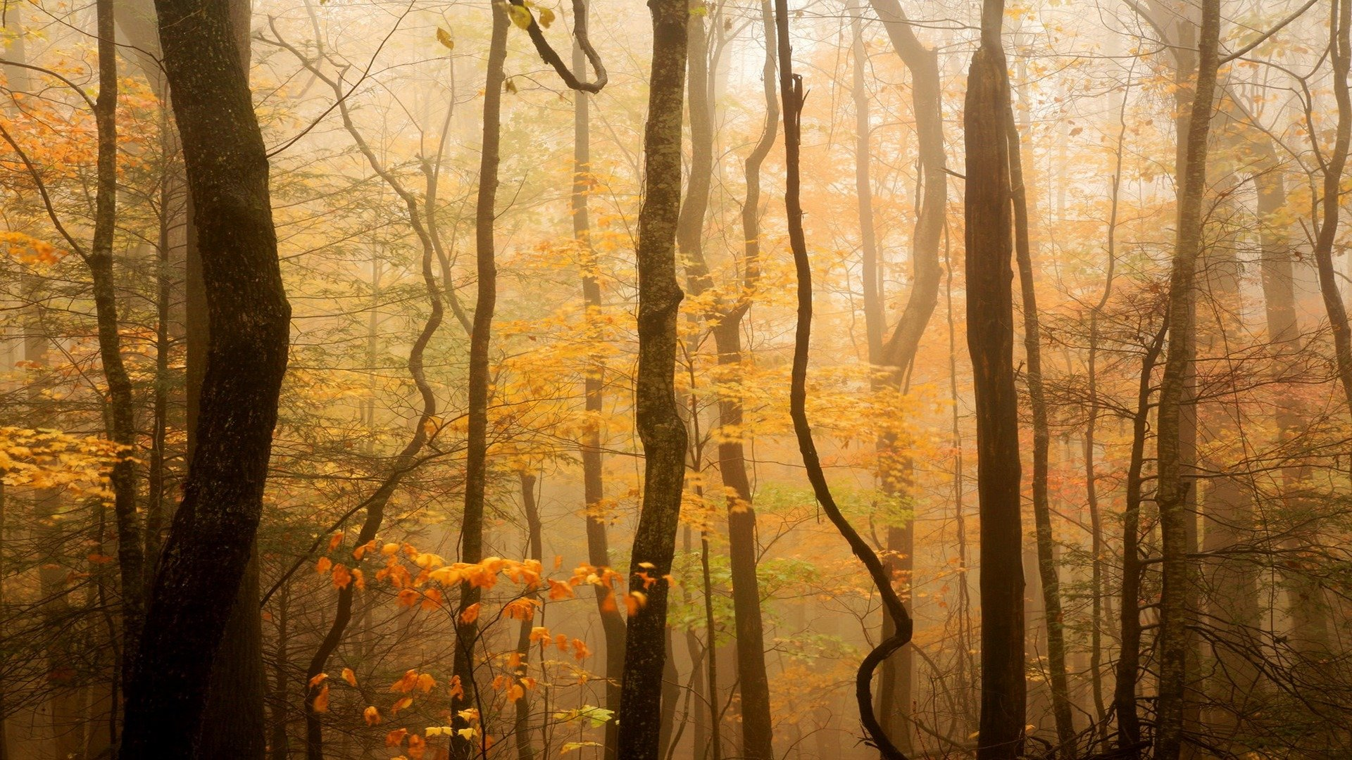 free download forest background id 474094 hd 1920x1080 for desktop