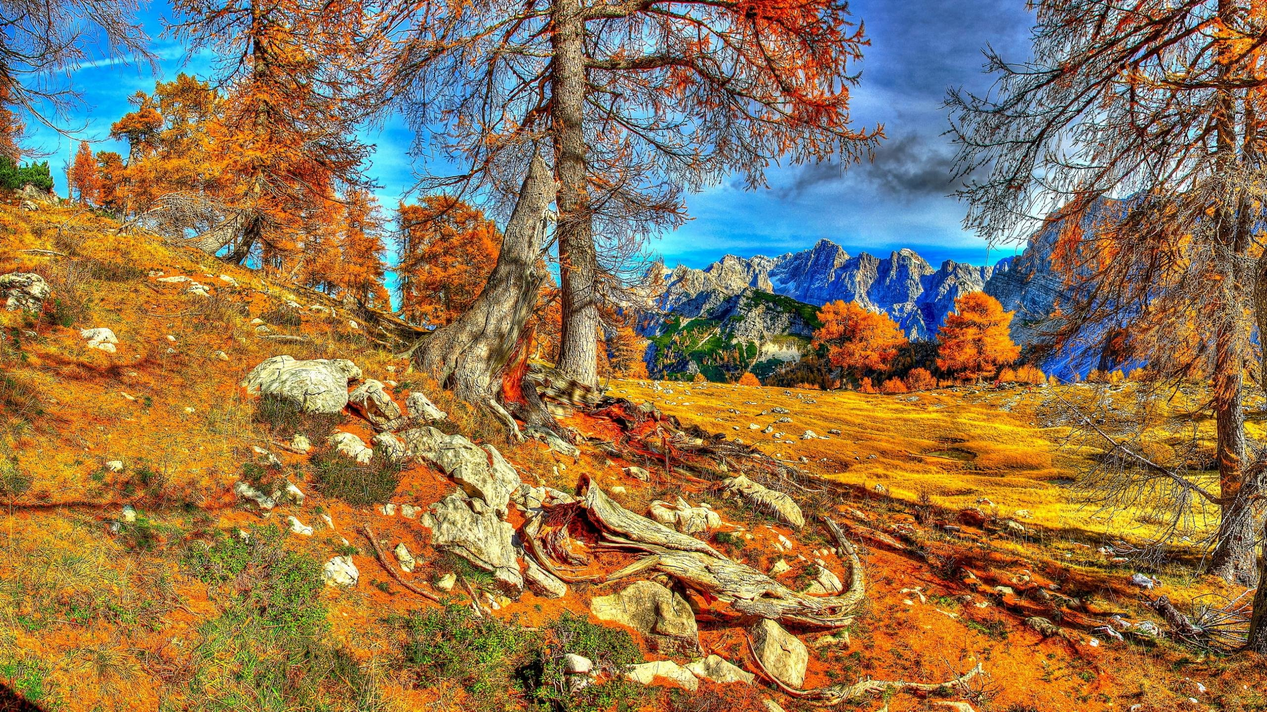 Fall computer wallpaper ID:20795 for