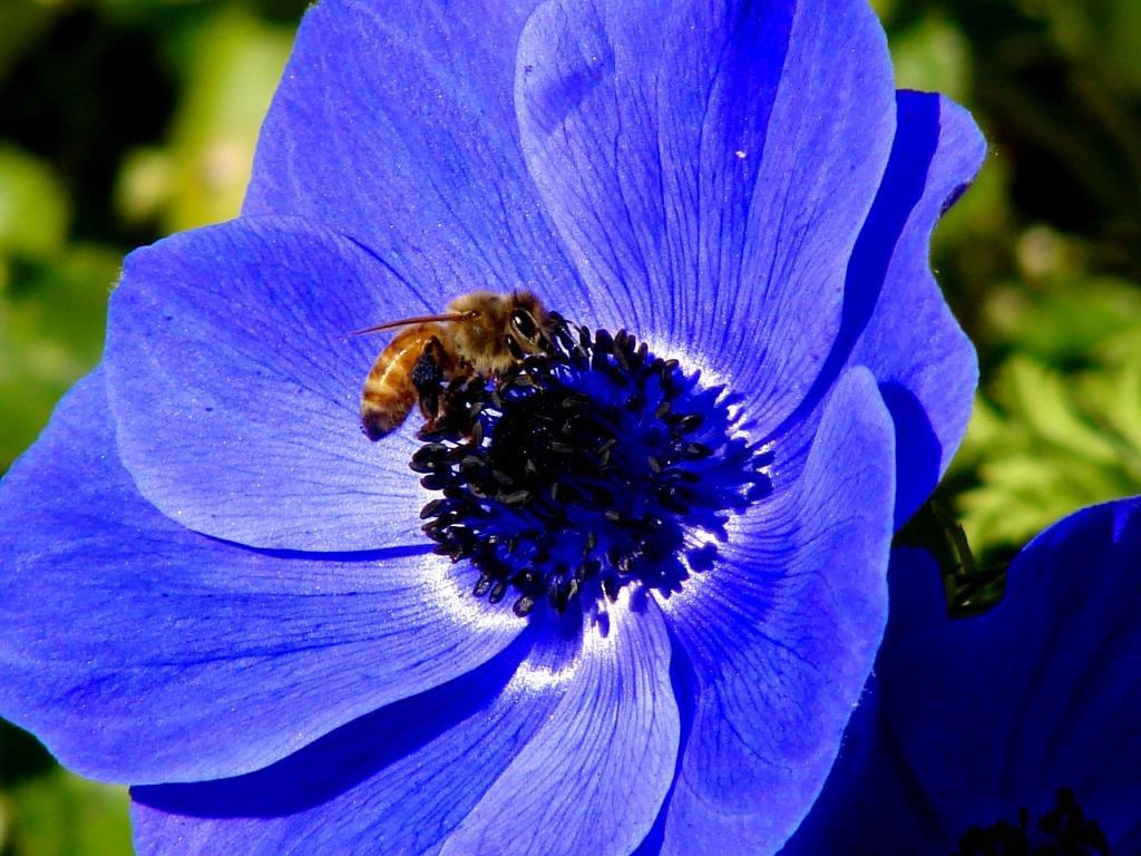 Best Bee wallpaper ID:460615 for High Resolution hd 1024x768 desktop