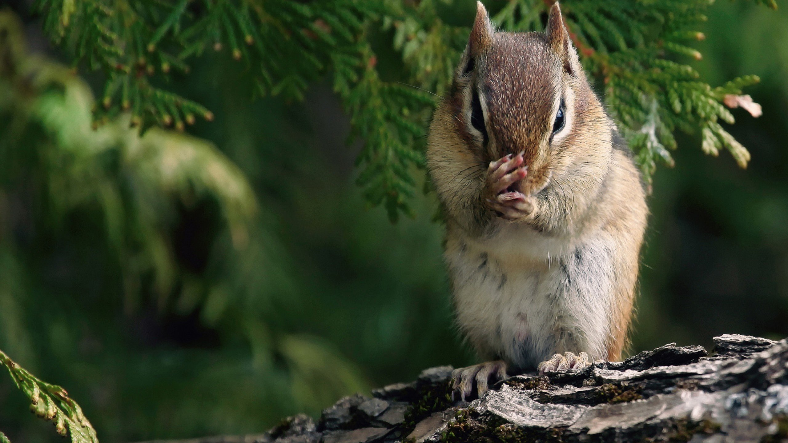Free Squirrel high quality background ID:311711 for hd 2560x1440 desktop