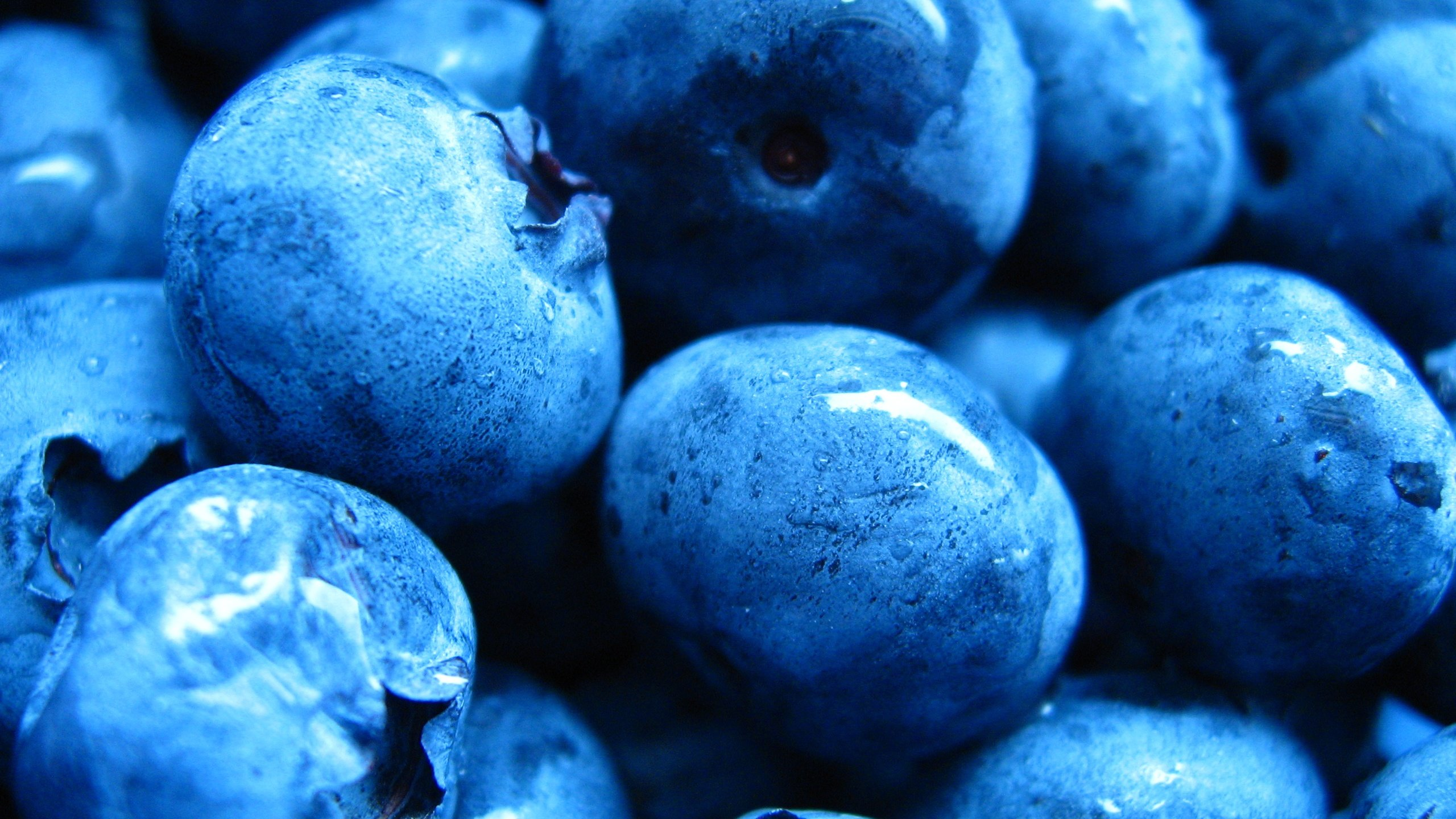 Free Blueberry high quality wallpaper ID:68991 for hd 2560x1440 desktop