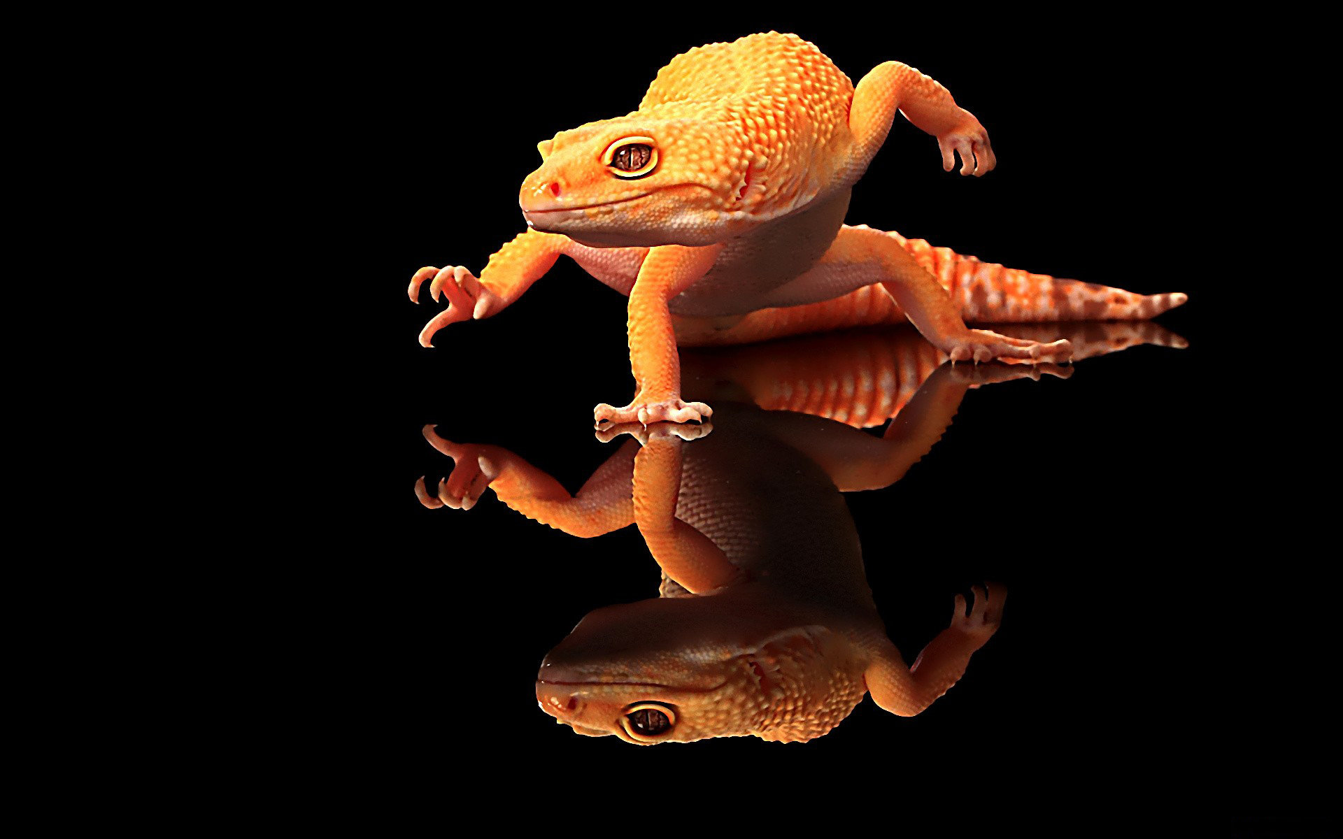 Best Gecko wallpaper ID:114543 for High Resolution hd 1920x1200 PC