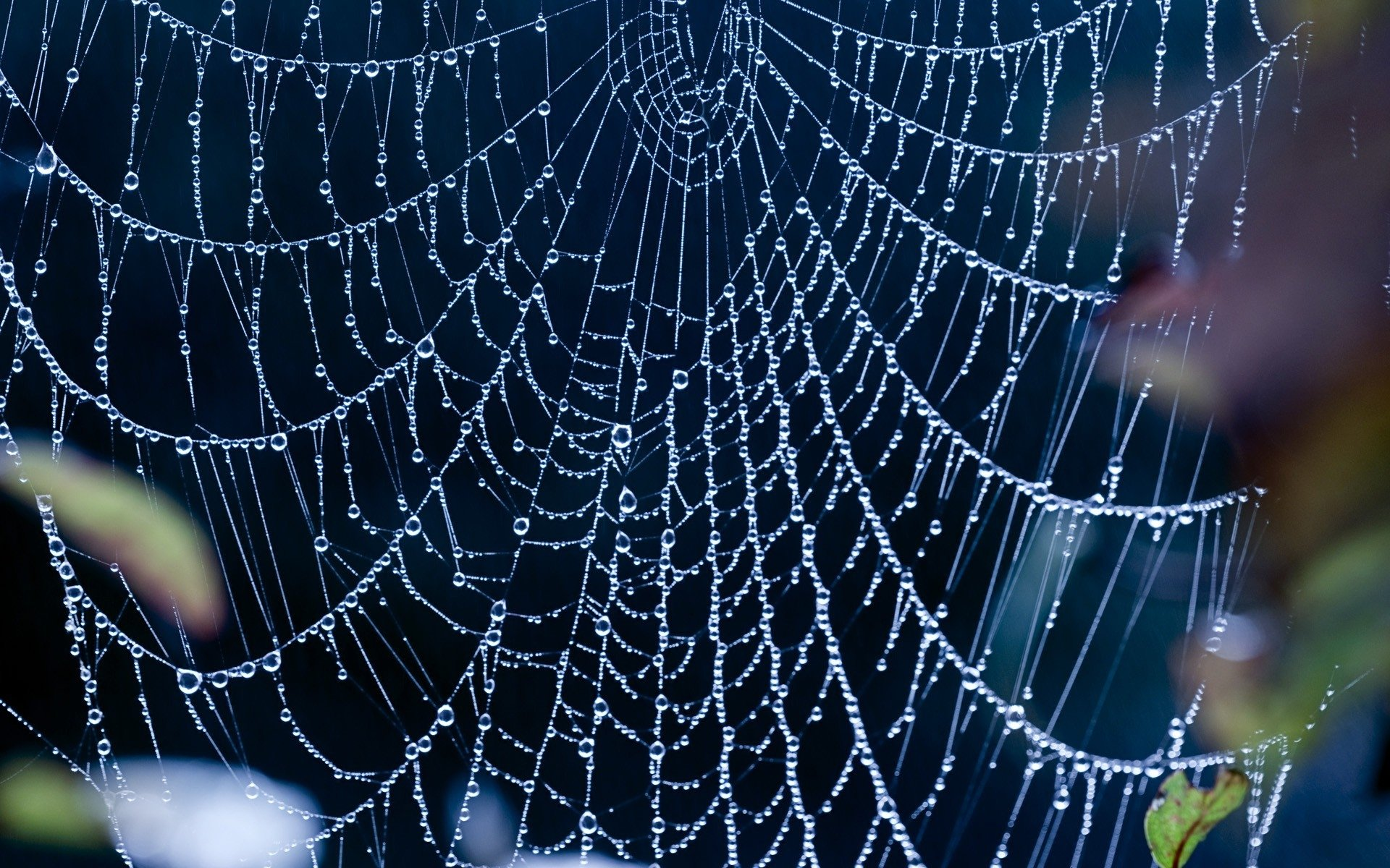 High resolution Spider Web hd 1920x1200 background ID:184723 for PC