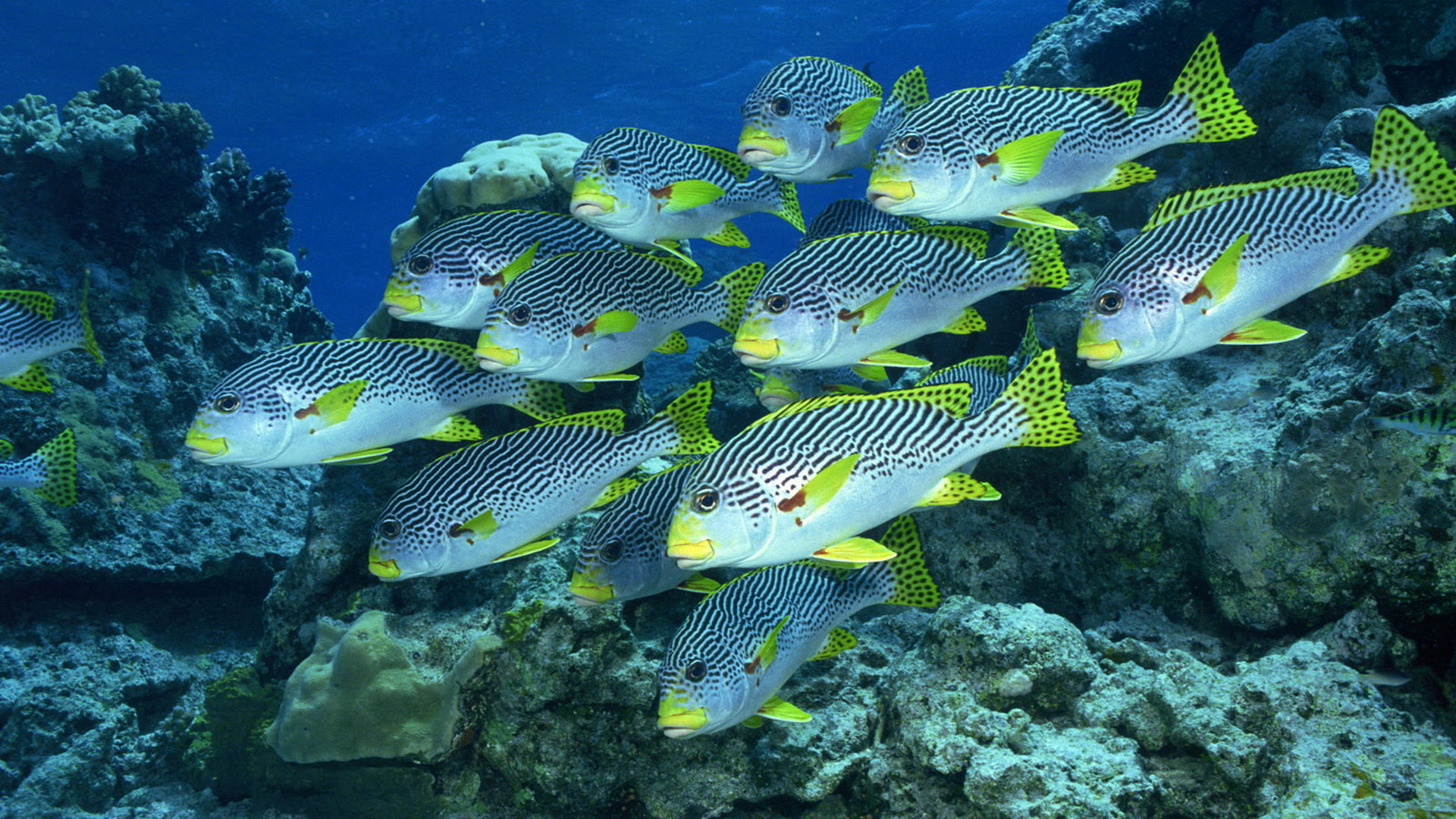 Awesome Fish free background ID:66029 for hd 1920x1080 PC