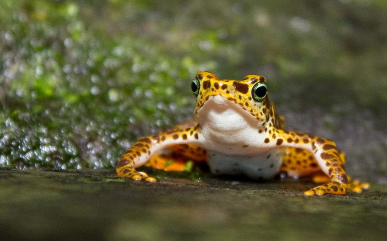 Free Frog high quality background ID:328879 for hd 1280x800 PC