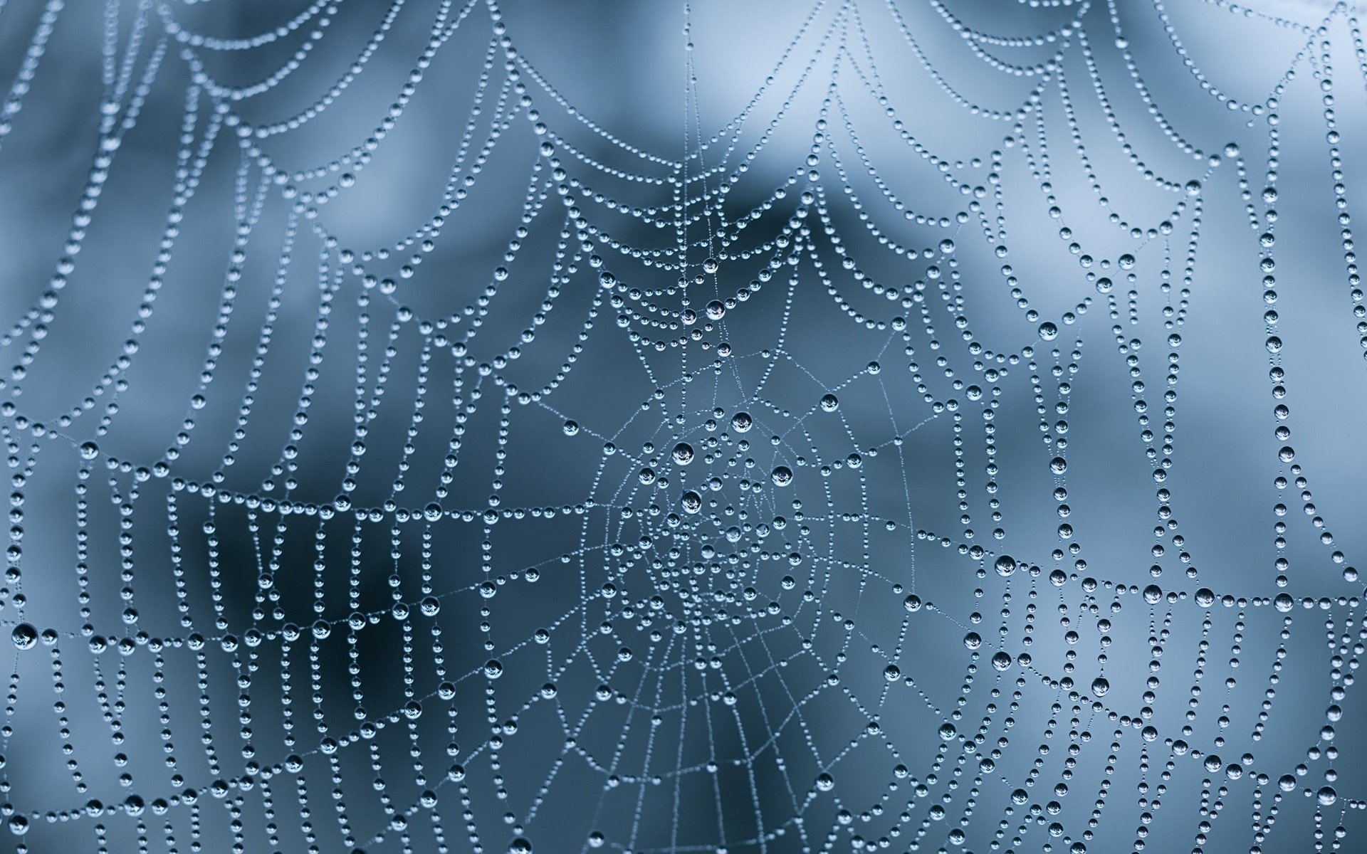 Free download Spider Web wallpaper ID:184725 hd 1920x1200 for desktop