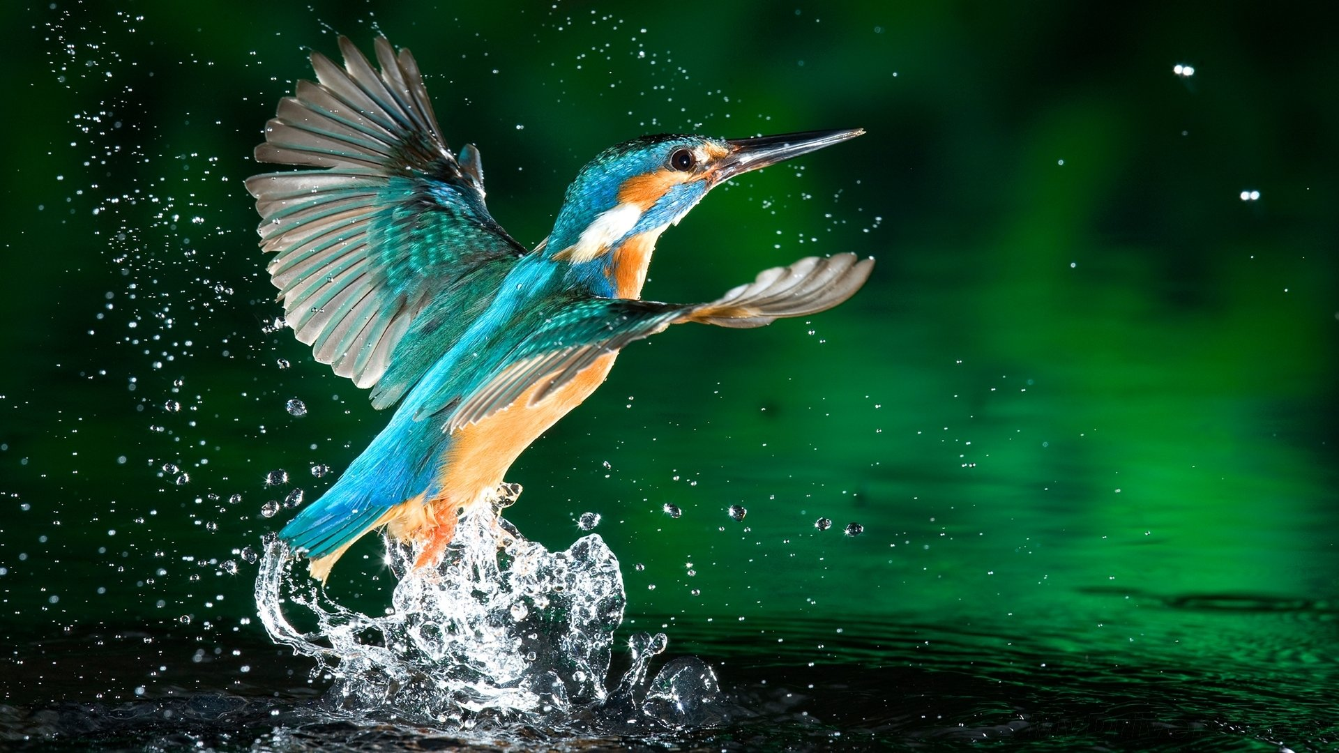 Free download Kingfisher background ID:311299 full hd 1080p for computer