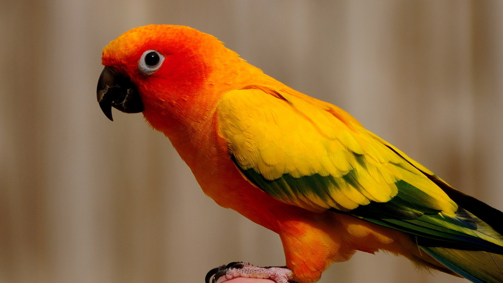 Free Parrot high quality wallpaper ID:25714 for 1080p computer