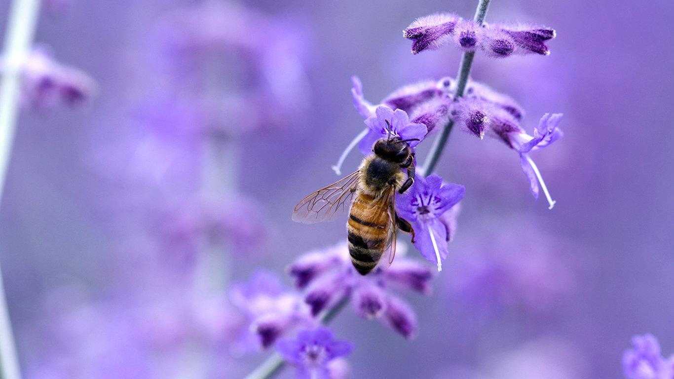 Free download Bee background ID:460763 1366x768 laptop for desktop