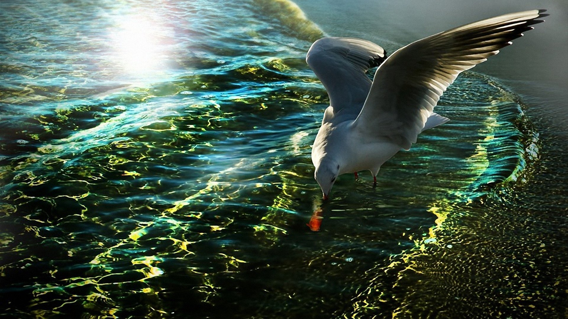 Download hd 1080p Seagull computer background ID:66945 for free
