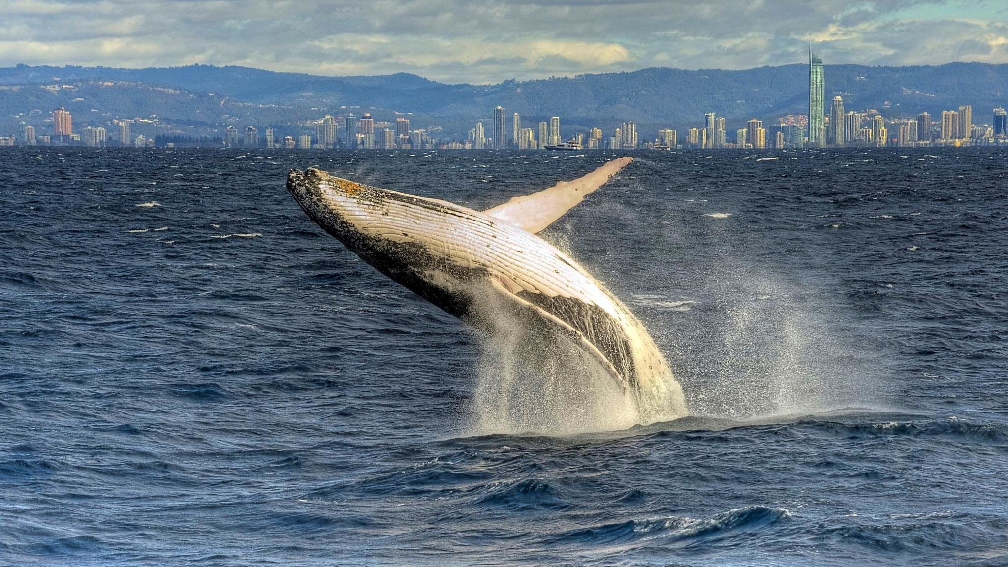 Free Whale high quality background ID:463293 for hd 2048x1152 PC