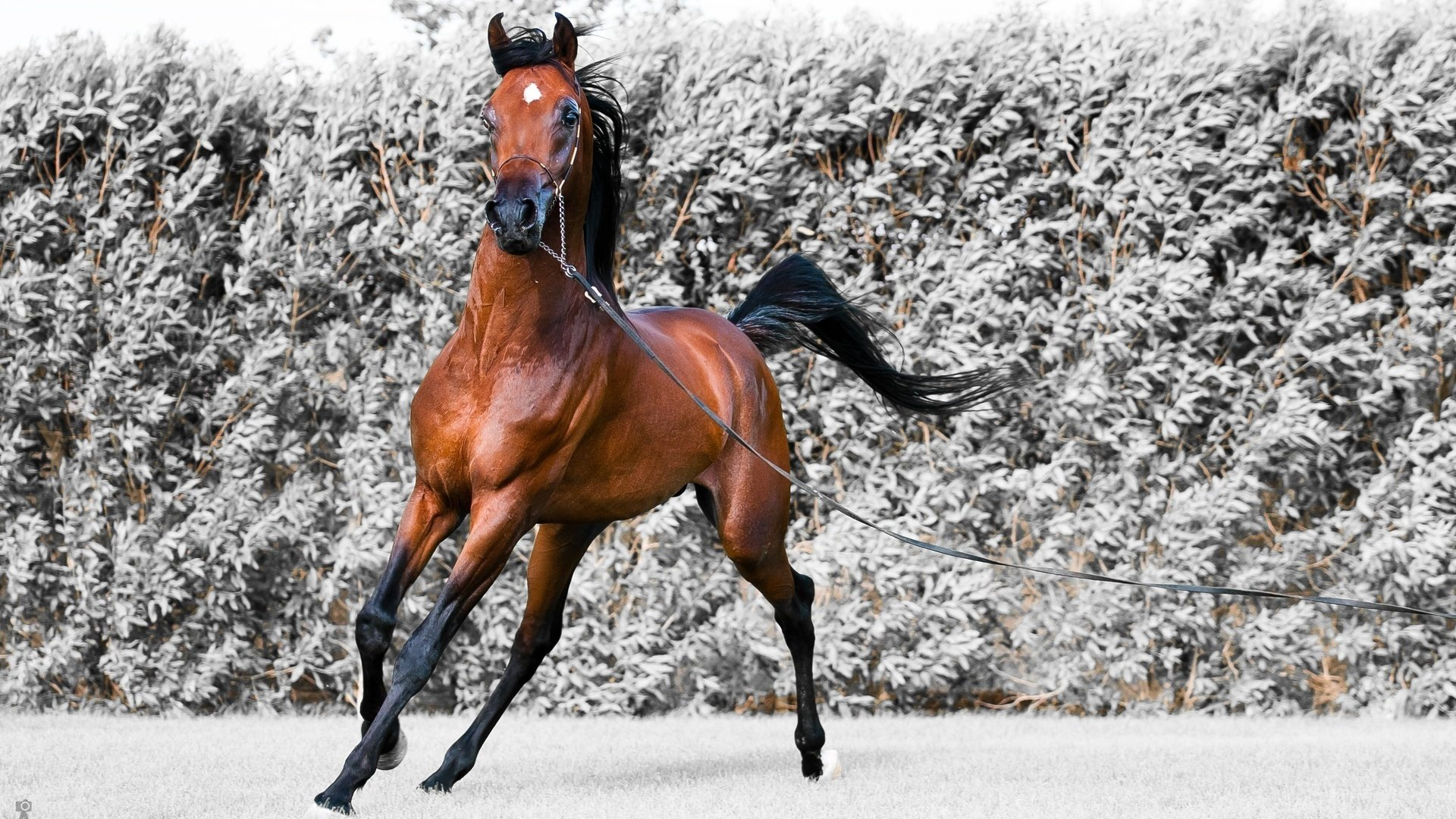 Free Horse high quality background ID:23221 for 1080p PC