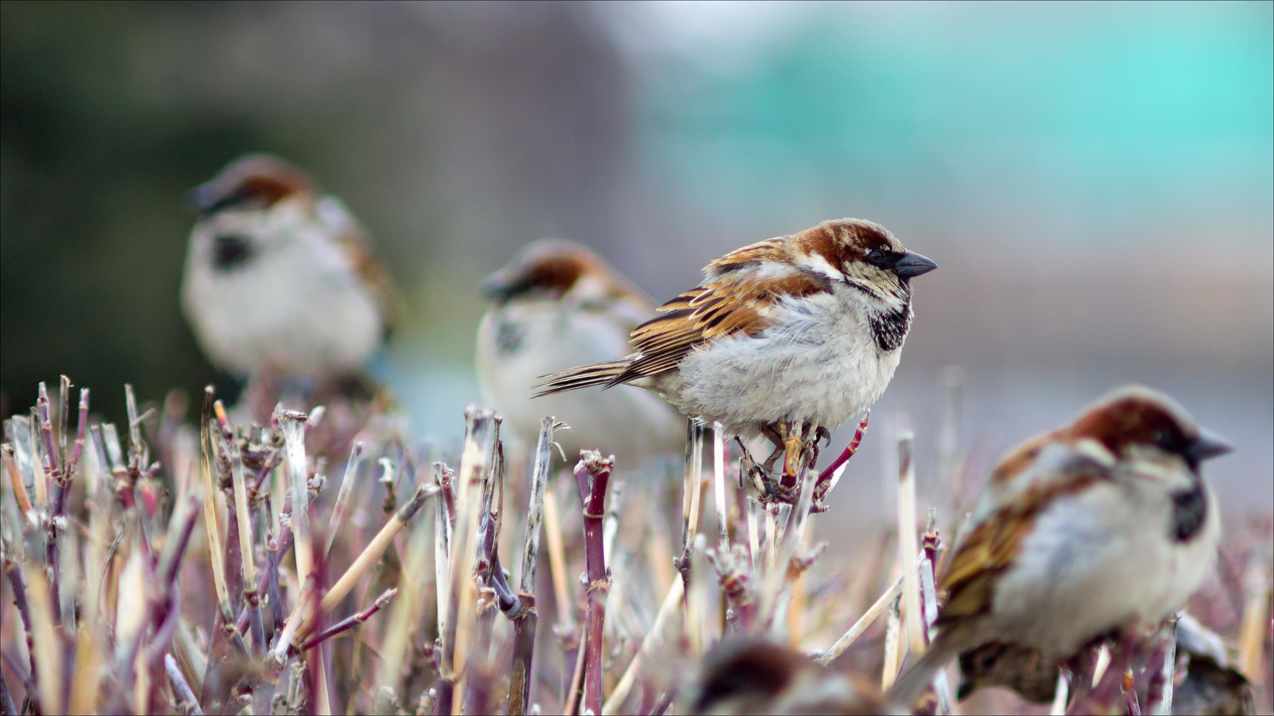 Download hd 2560x1440 Sparrow PC wallpaper ID:110692 for free