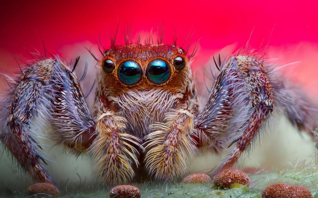 Free Spider high quality wallpaper ID:22052 for hd 1280x800 PC