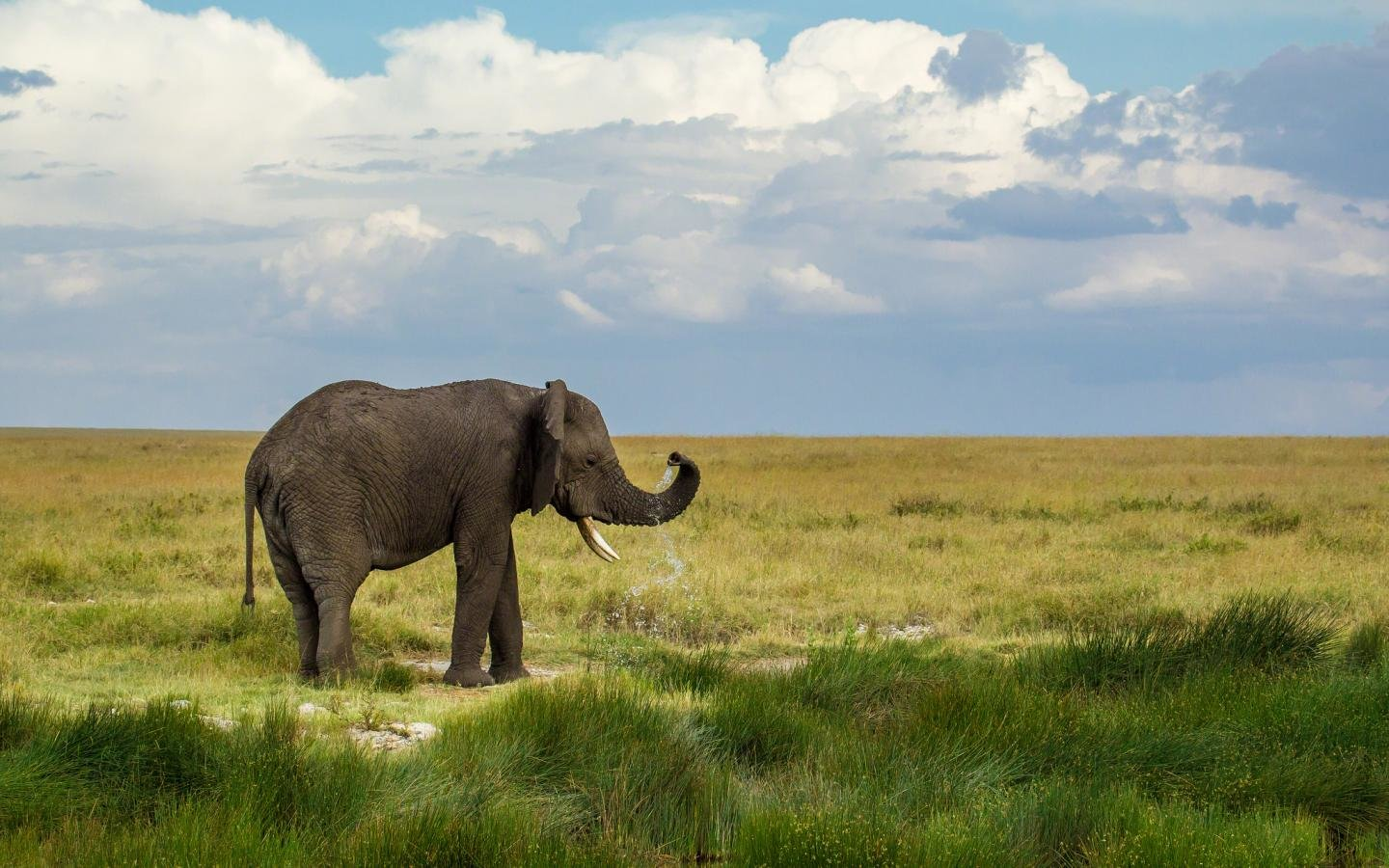 High resolution Elephant hd 1440x900 background ID:132597 for computer